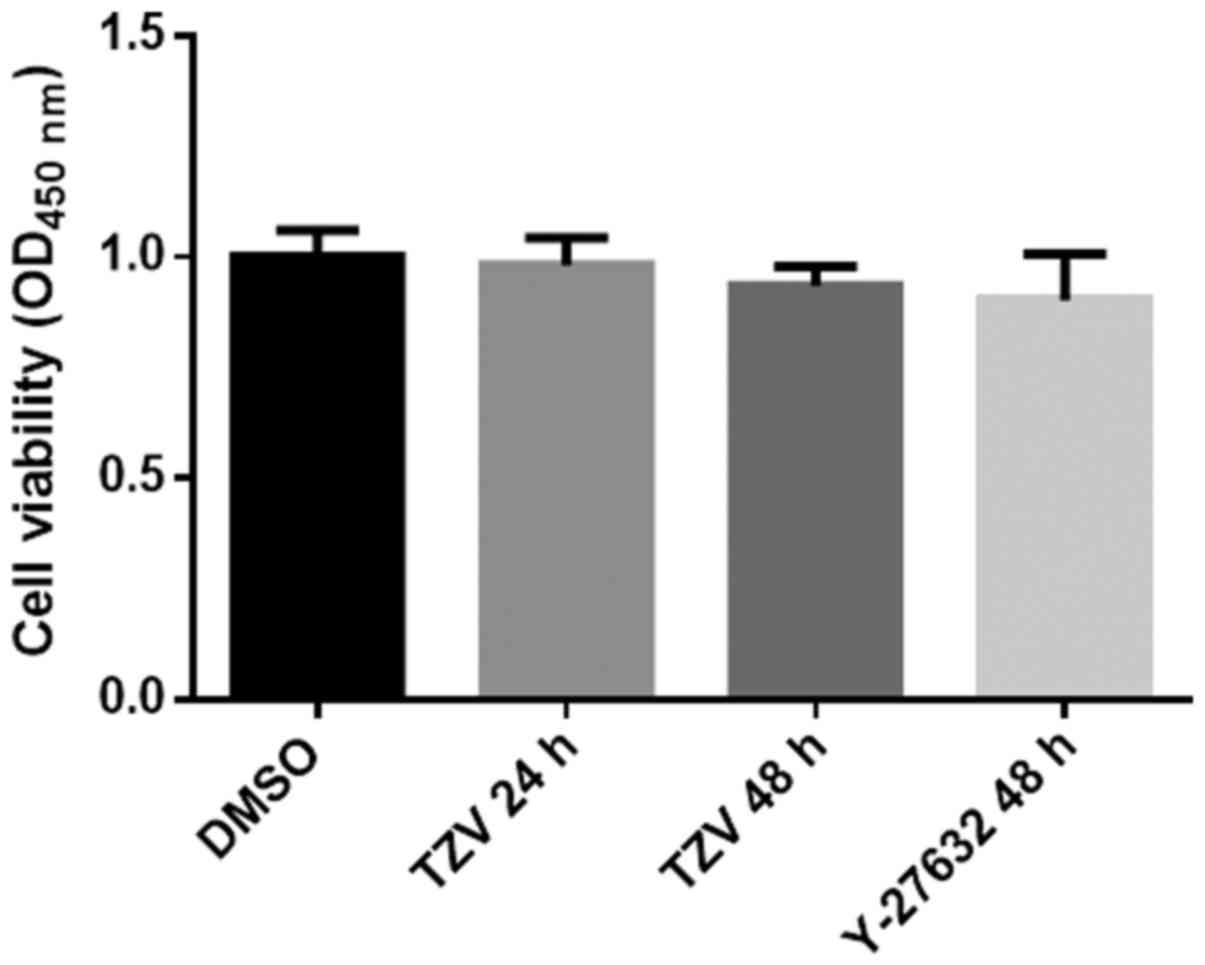 The ROCK inhibitor, thiazovivin, inhibits human corneal endothelial