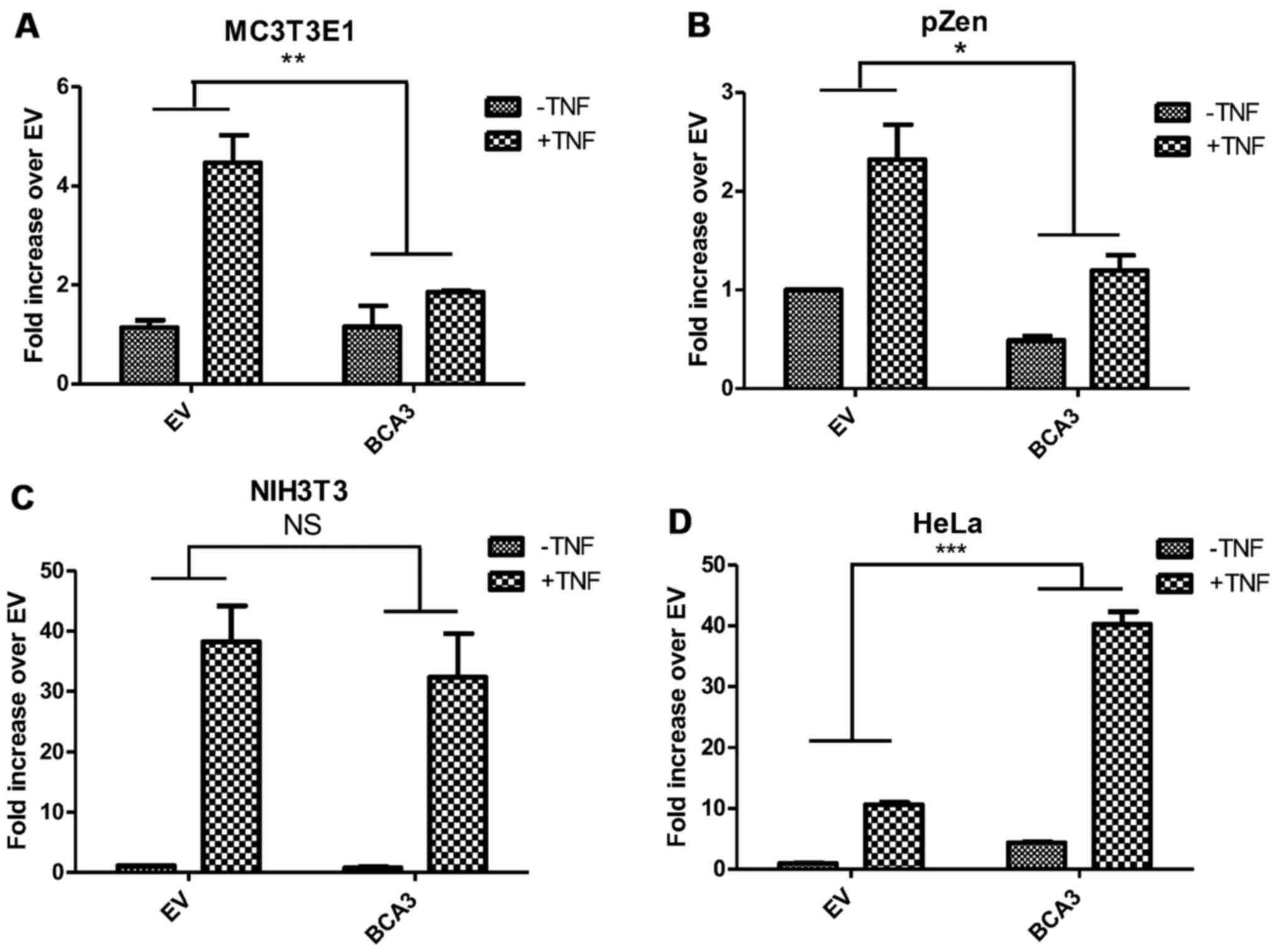 Breast Cancer Associated Gene 3 Interacts With Rac1 And Augments Nf 543 Cat Engine Diagram Figure 6 The Effect Of Bca3 On Nuclear Factor B Signaling Is Cell Type Dependent Cells Were Transfected
