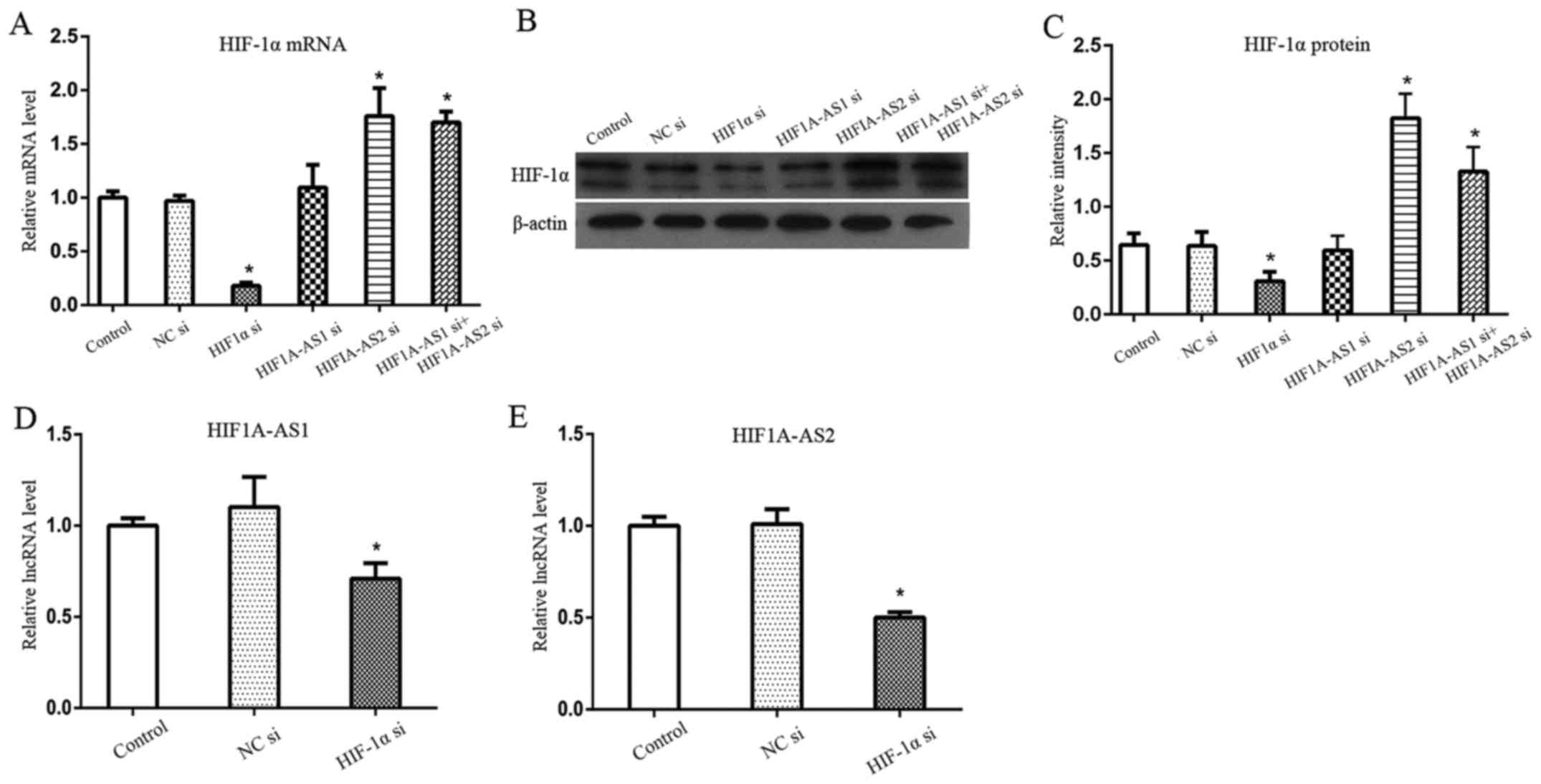 Comparison Of Hif1aas1 And Hif1aas2 In Regulating Hif1 The Test Loop For Circuit Continuity At Ends Twolong Figure 4 Effects Silencing Hif1a As1 As2 Hif 1 On Expression Each Other Hypoxia A Mrna Showed No Significant