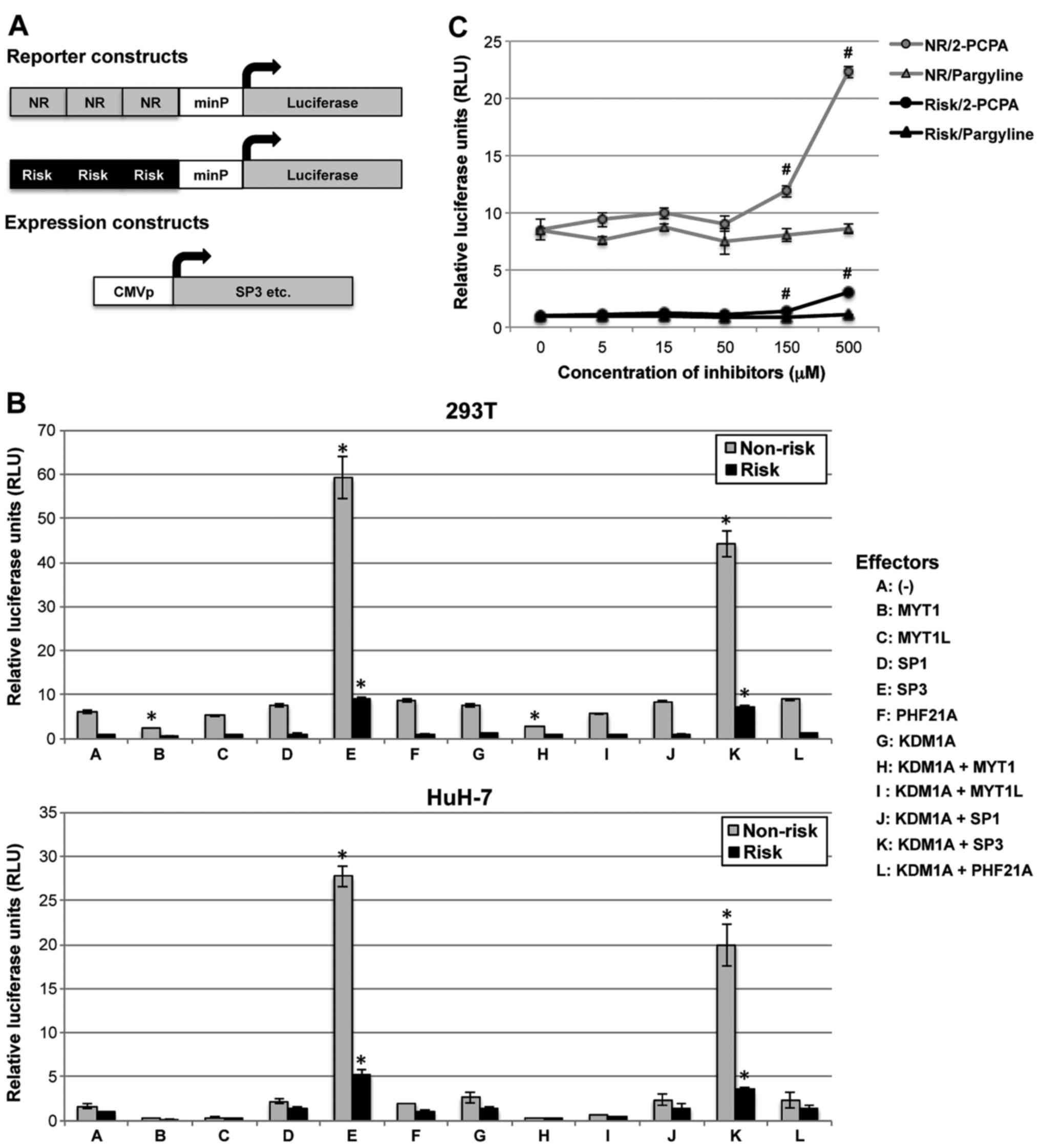 A type 2 diabetes-associated SNP in KCNQ1 (rs163184) modulates the
