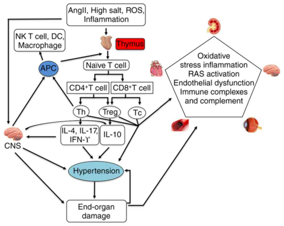 Mechanisms in hypertension and target organ damage: Is the