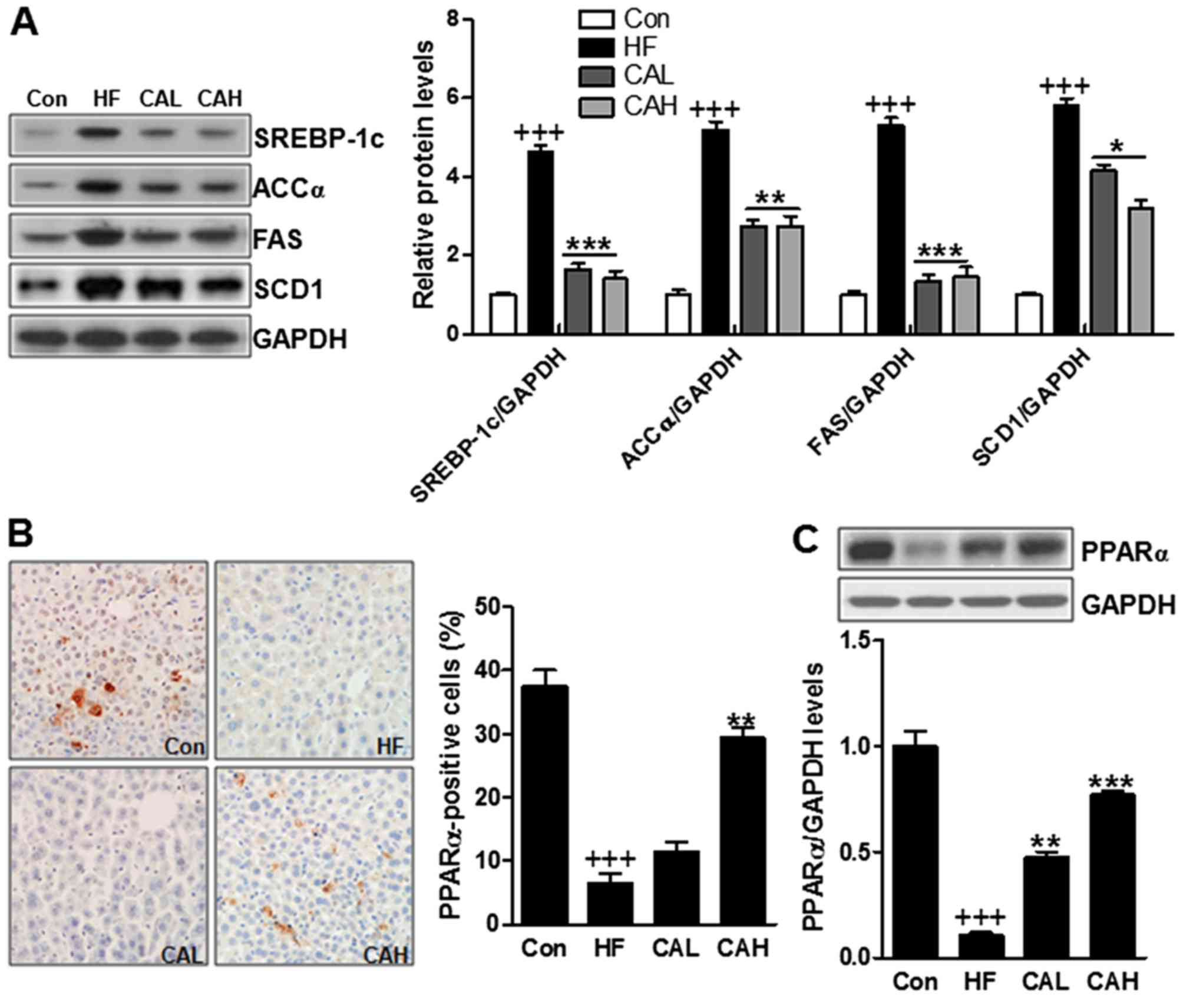 Carnosic acid protects mice from high-fat diet-induced NAFLD