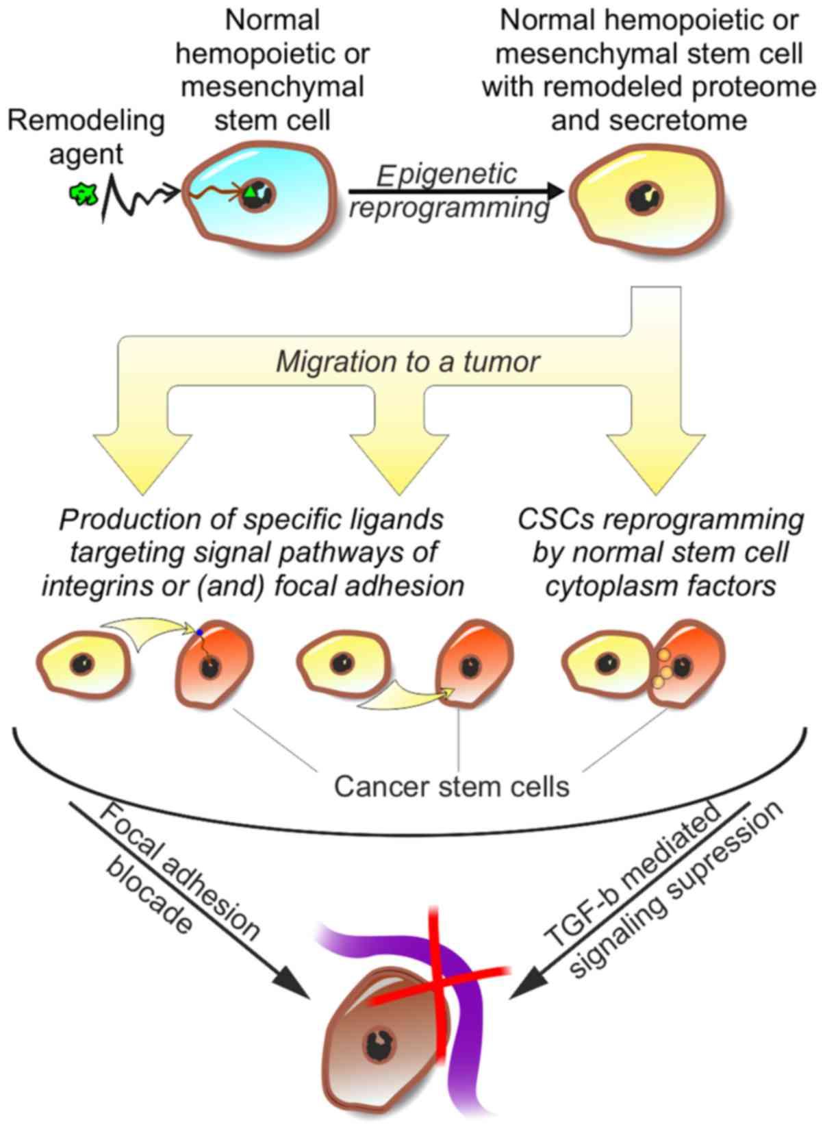 Personalized regulation of glioblastoma cancer stem cells based on