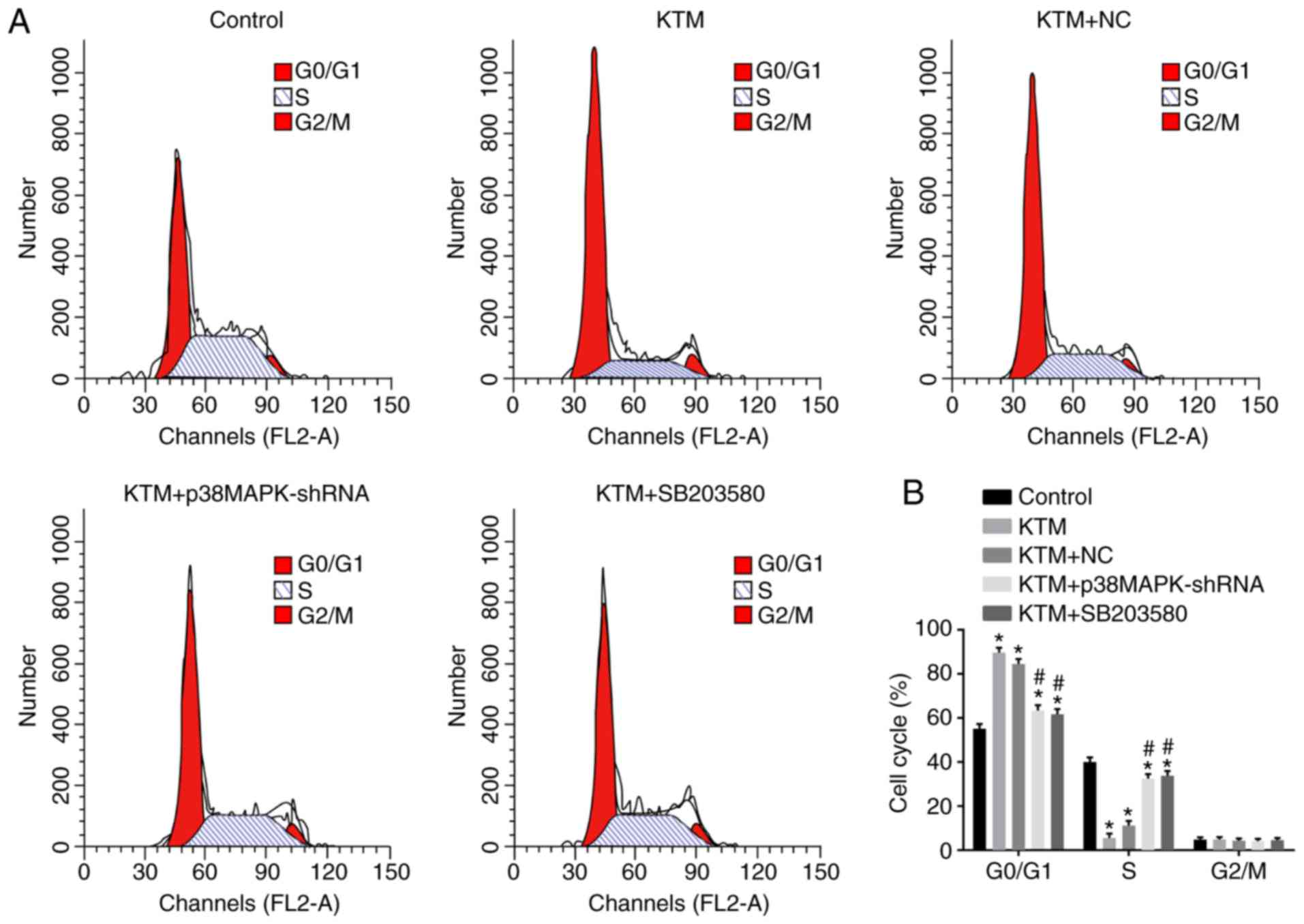 p38 mitogen activated protein kinase gene silencing rescues rat