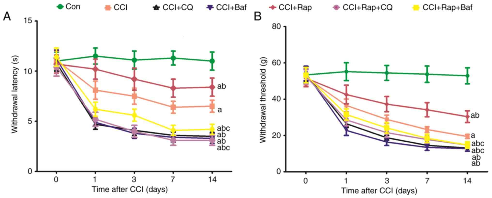 Effect of autophagy on allodynia, hyperalgesia and astrocyte