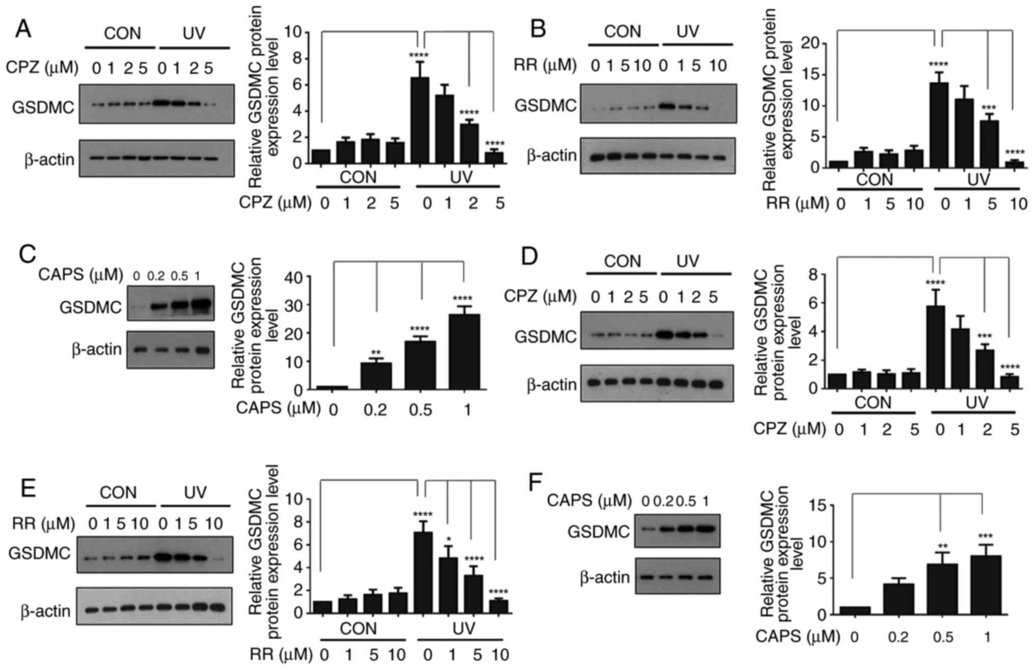 Ultraviolet light-induced gasdermin C expression is mediated via
