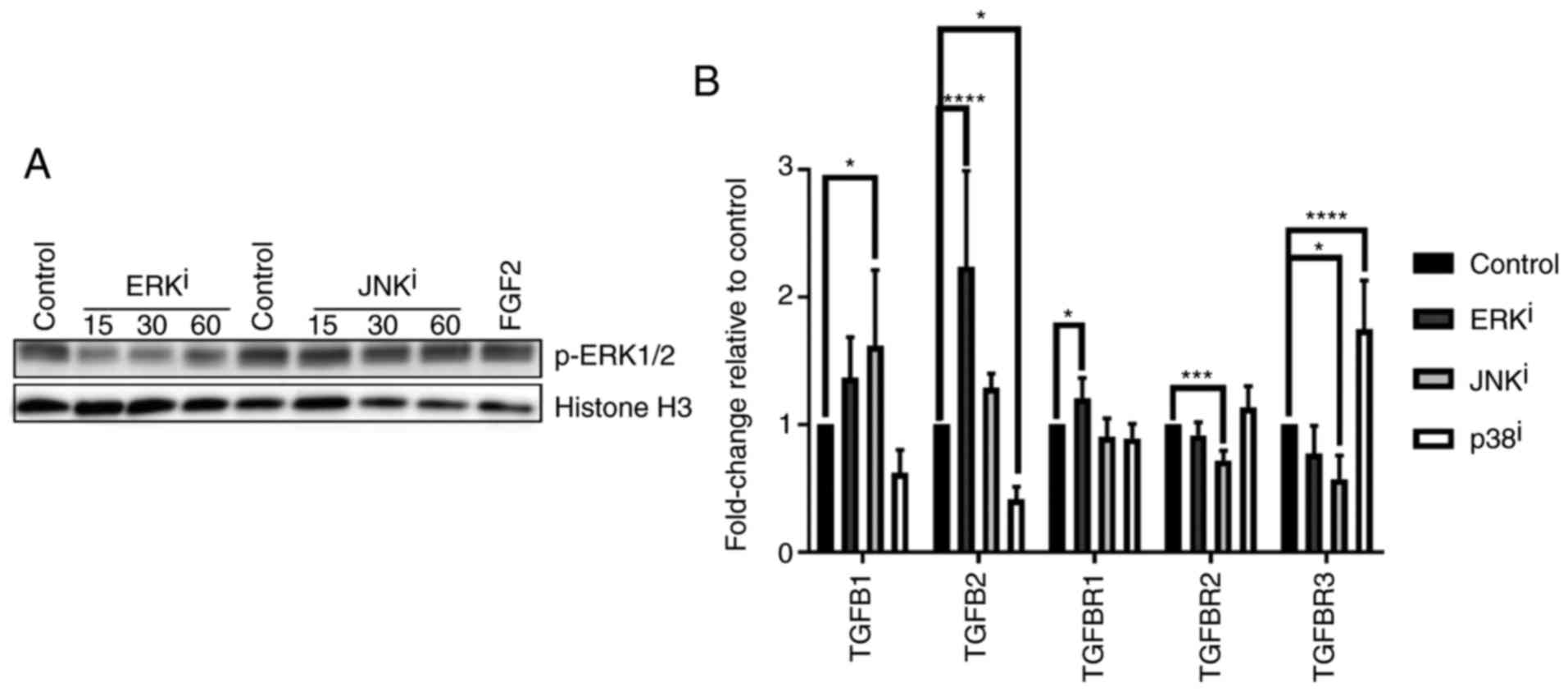 fibroblast activation protein function