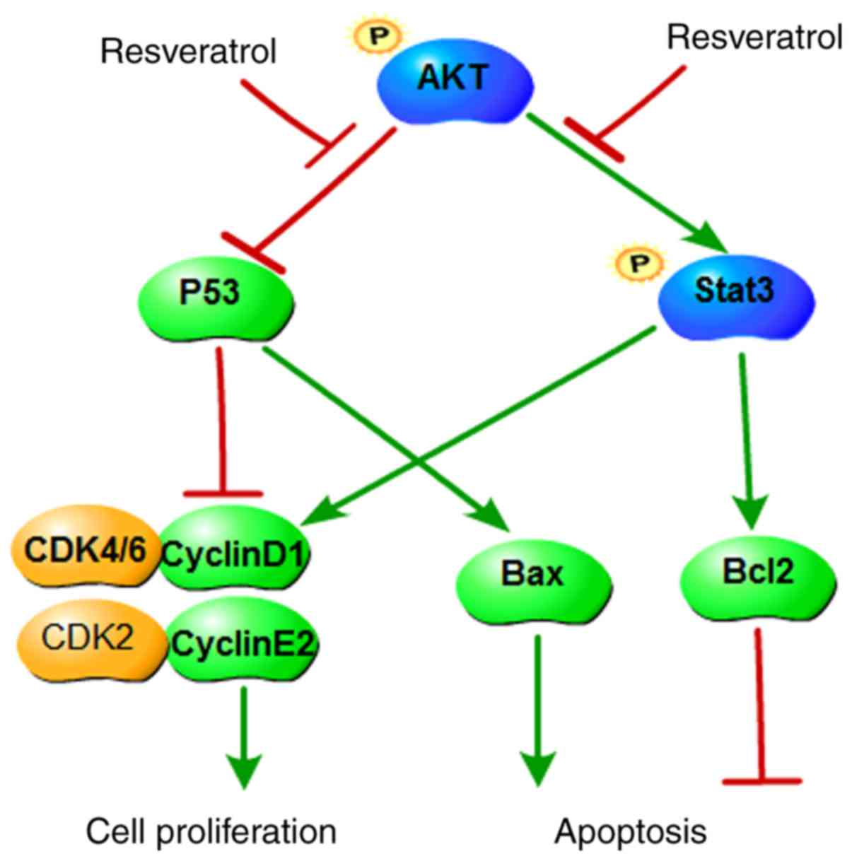 Resveratrol Suppresses Colon Cancer Growth By Targeting The Akt Stat3 Signaling Pathway