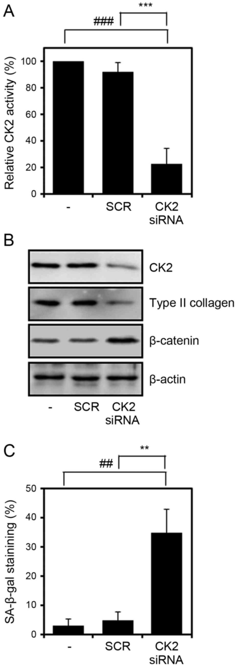 Inhibition of protein kinase CK2 facilitates cellular senescence by