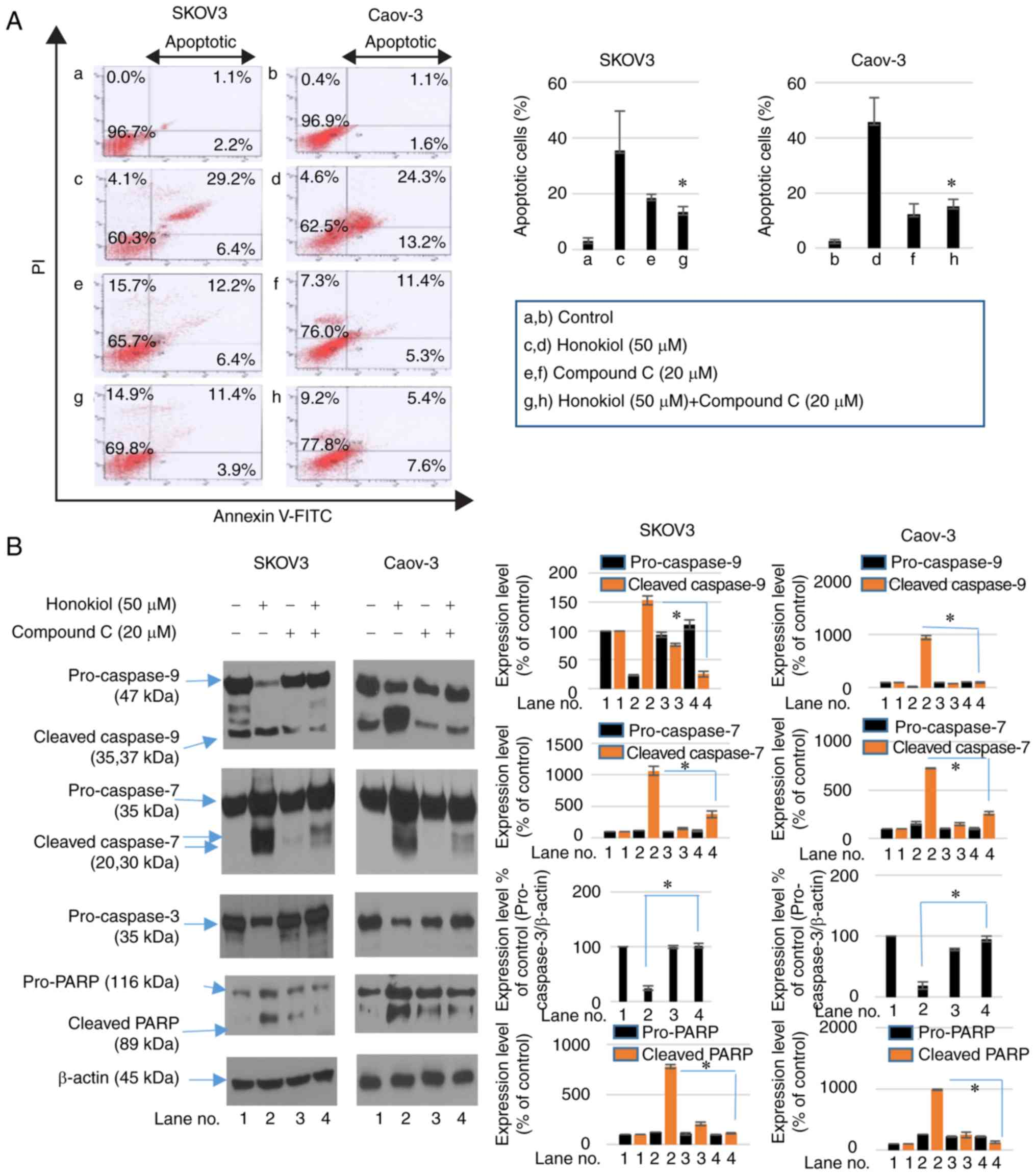 Honokiol Induces Apoptosis And Suppresses Migration And Invasion Of Ovarian Carcinoma Cells Via Ampk Mtor Signaling Pathway