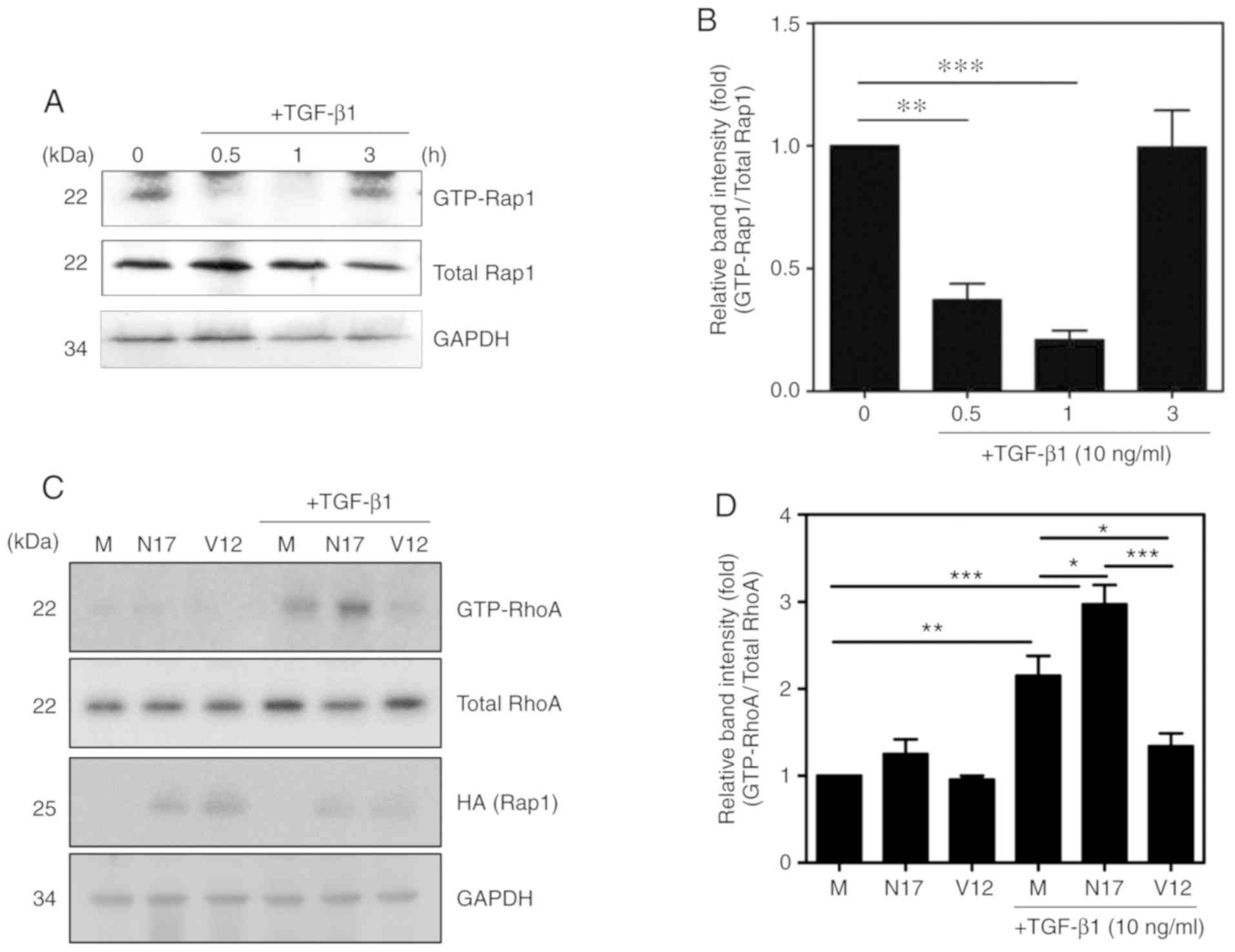Rap1 regulates hepatic stellate cell migration through the