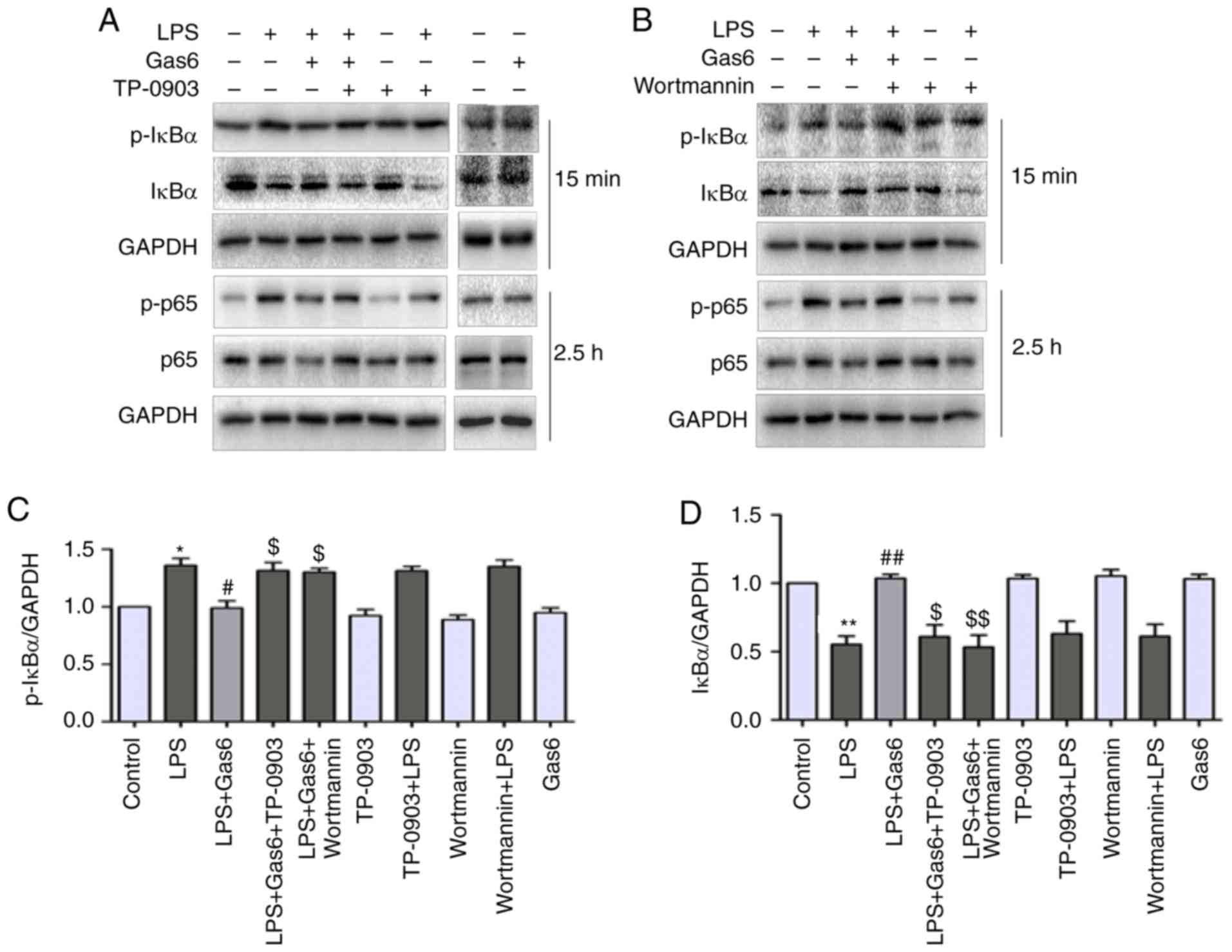 Gas6 attenuates lipopolysaccharide‑induced TNF‑α expression