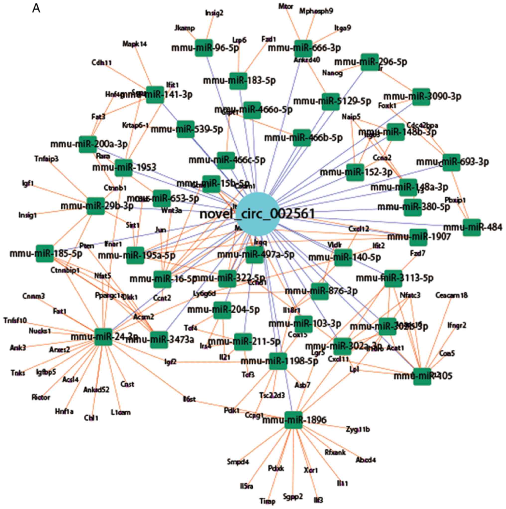 Circular RNA Profile In Liver Tissue Of EpCAM Knockout Mice