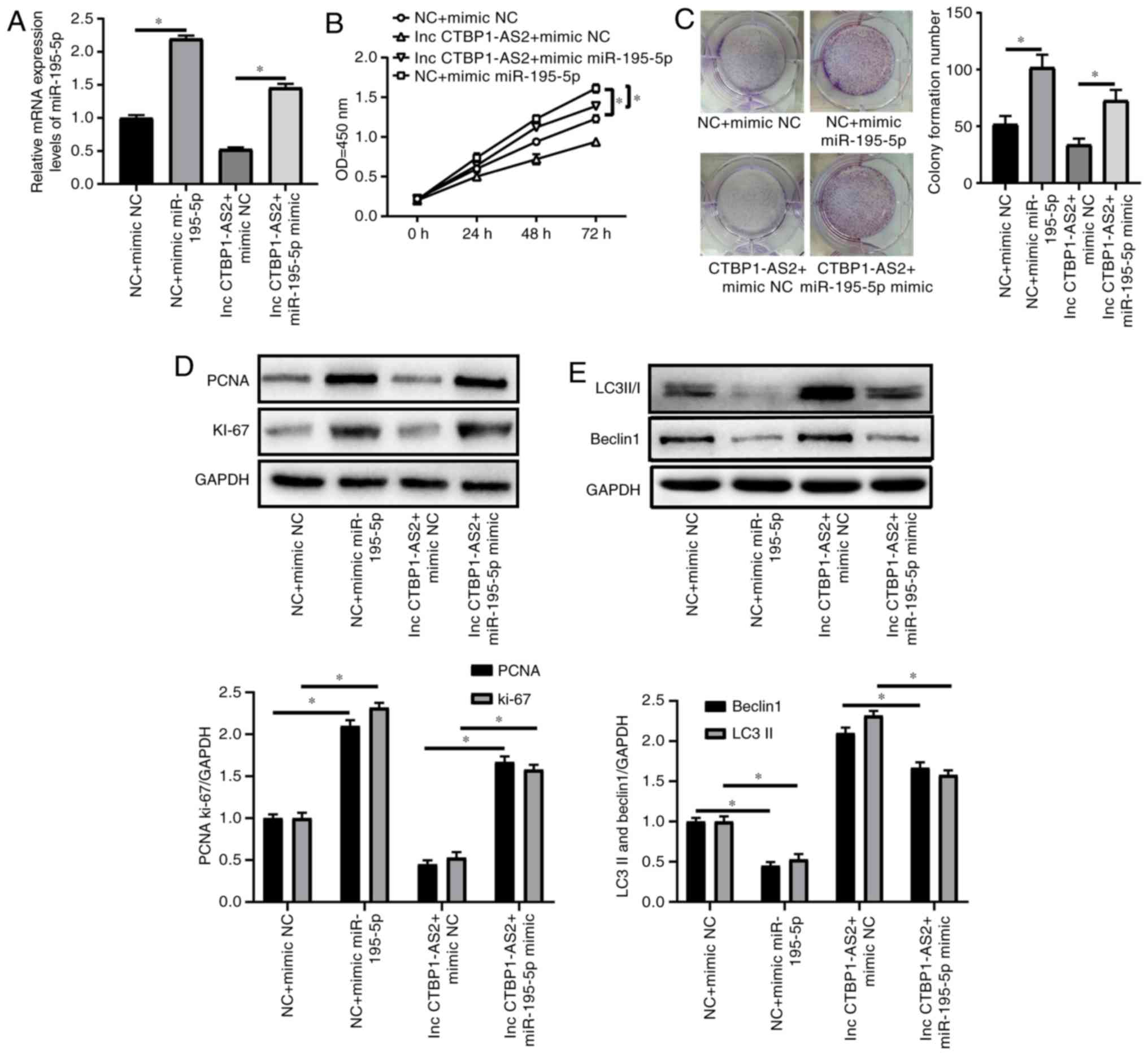 Effects of miR‑195‑5p on cell proliferation and apoptosis