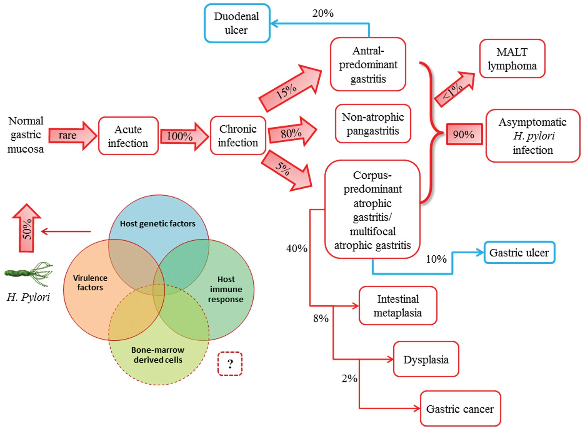 Схемы эрадикационная терапия маастрихт 4