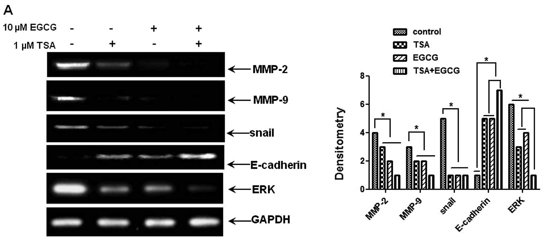 Epigallocatechin 3 Gallate Inhibits Invasion By Inducing