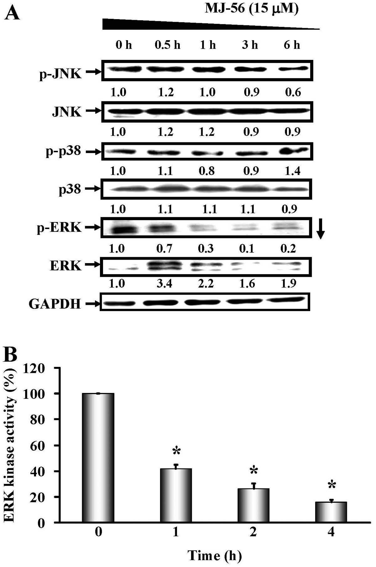 Dual Inhibition Of Egfr And C Met Kinase Activation By Mj