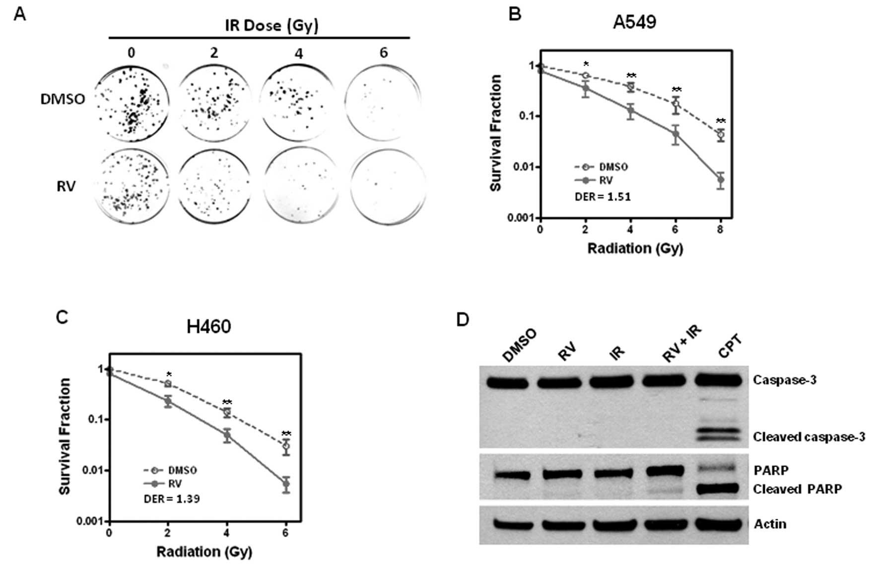 Resveratrol enhances ionizing radiation-induced premature senescence