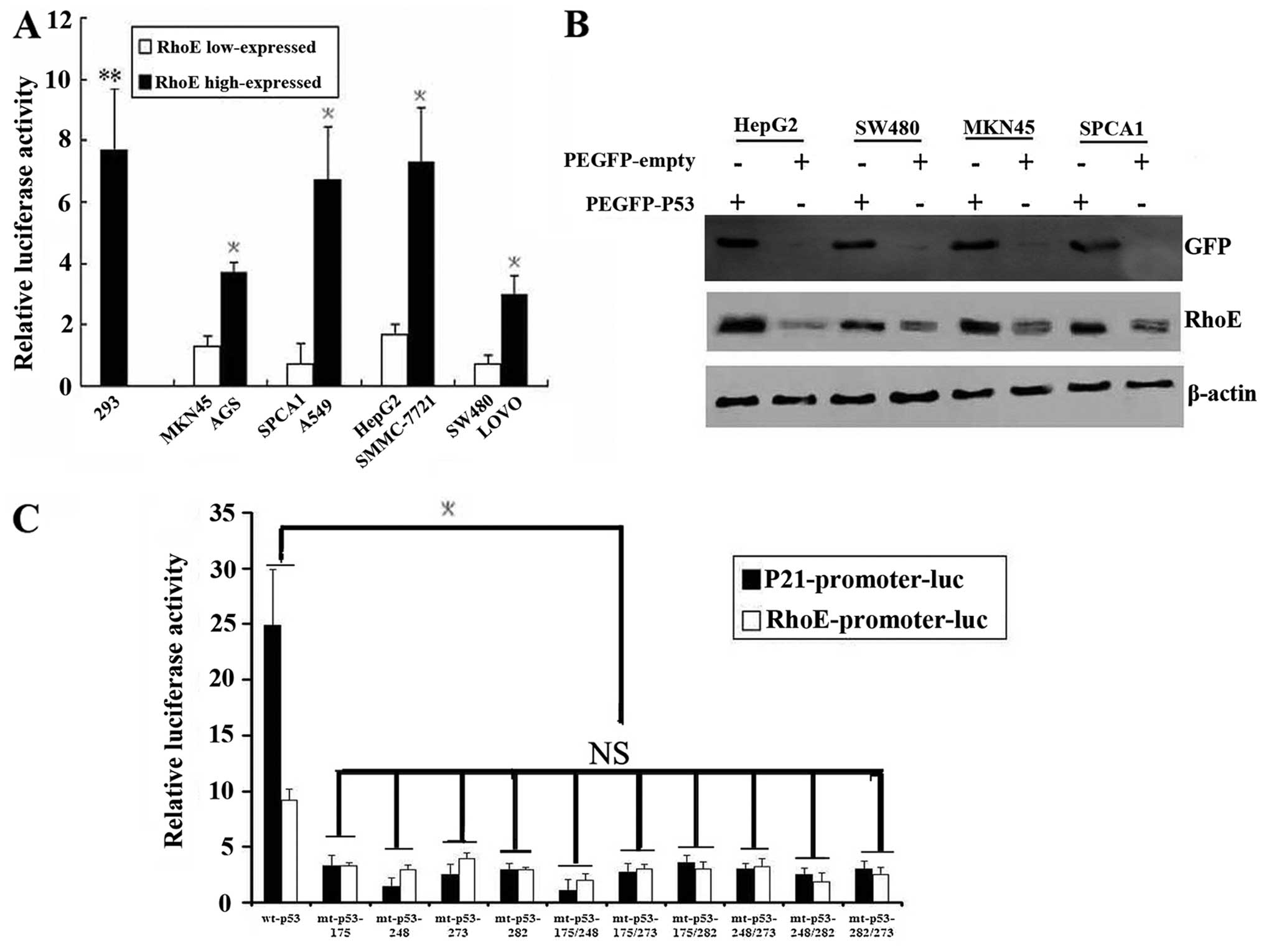 The Rho Gtpase Rhoe Is A P53 Regulated Candidate Tumor