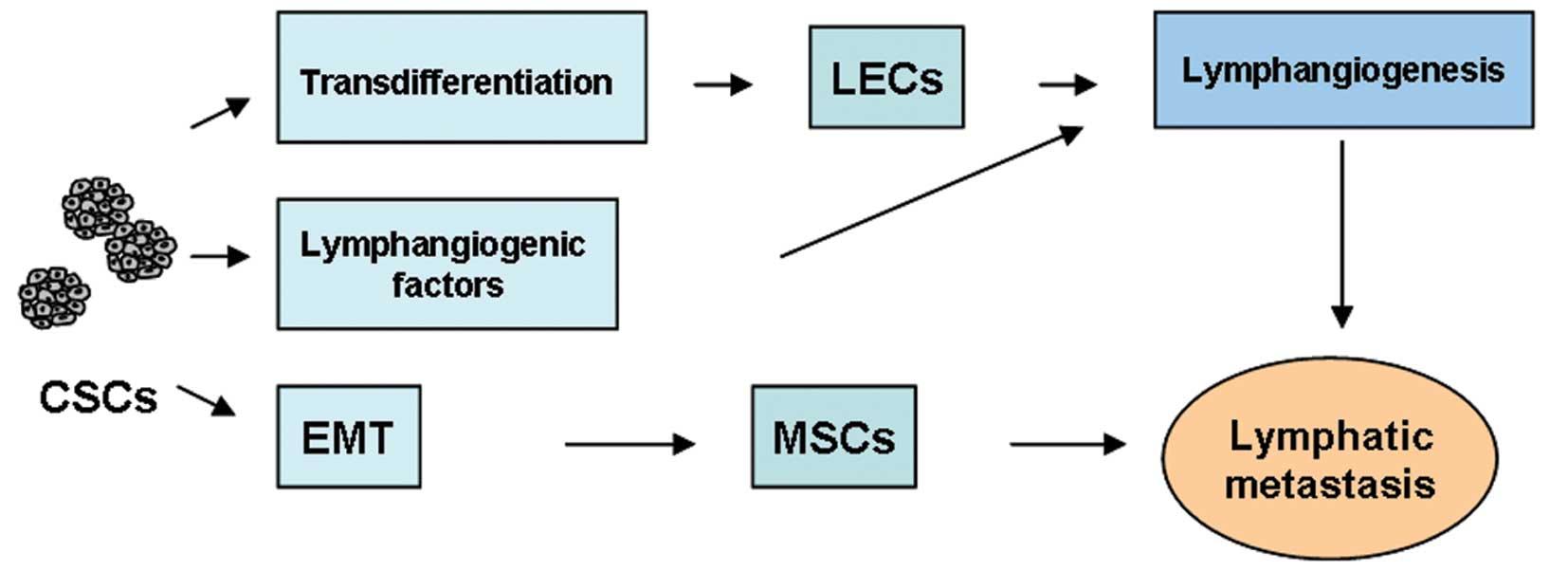 relationship between angiogenesis and metastasis