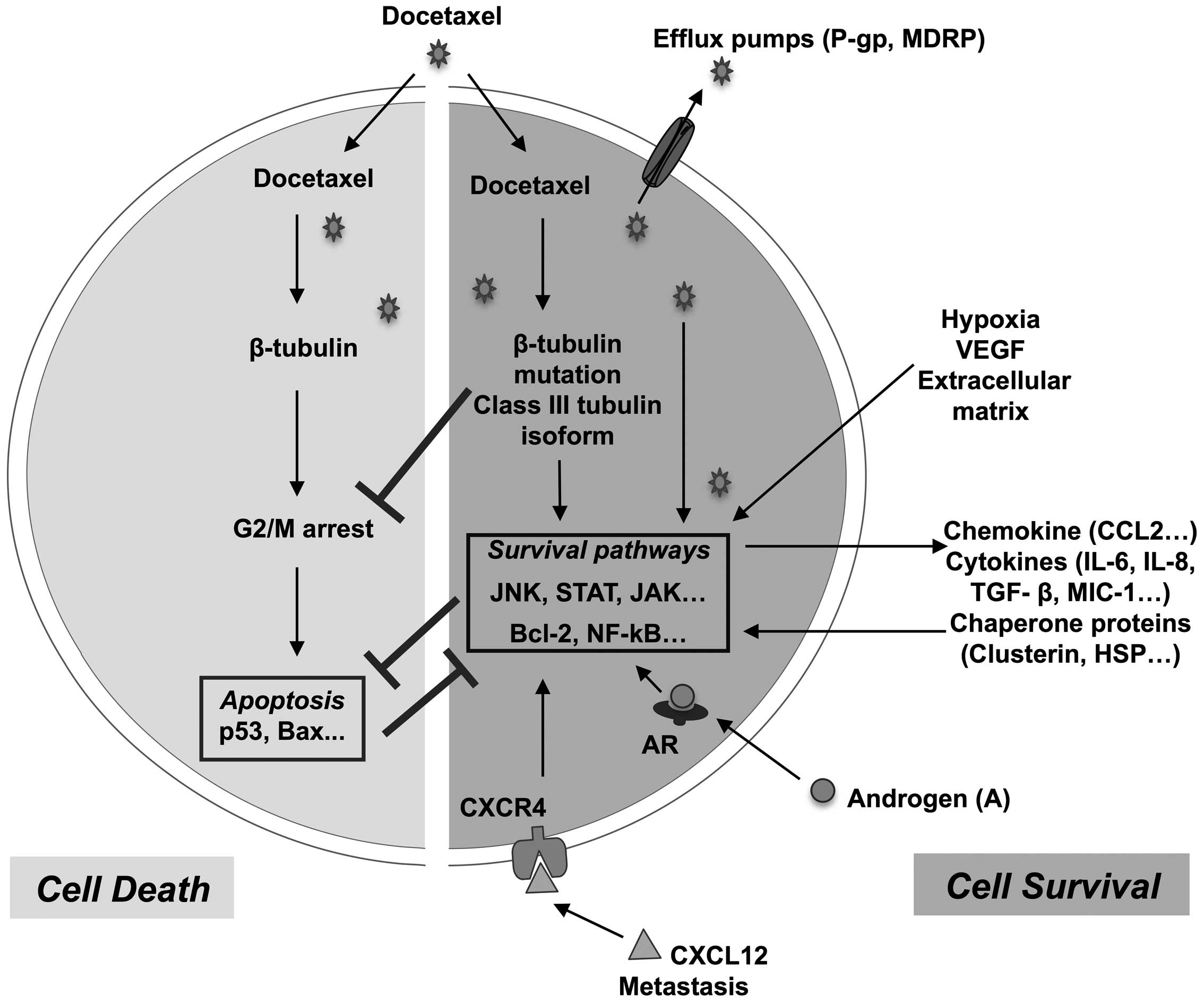 Taxotere (docetaxel) Label - FDA