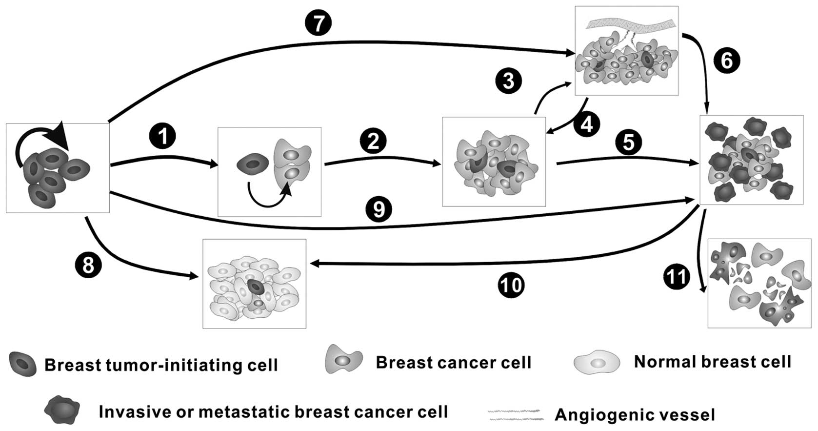 microrna 21 concentrations in breast cancer Microrna-21 (mir-21) located on 17q231 expressed in breast cancer has anti-apoptotic ability and causes tumor cell growth it is also involved in functions such as signal transduction pathways.