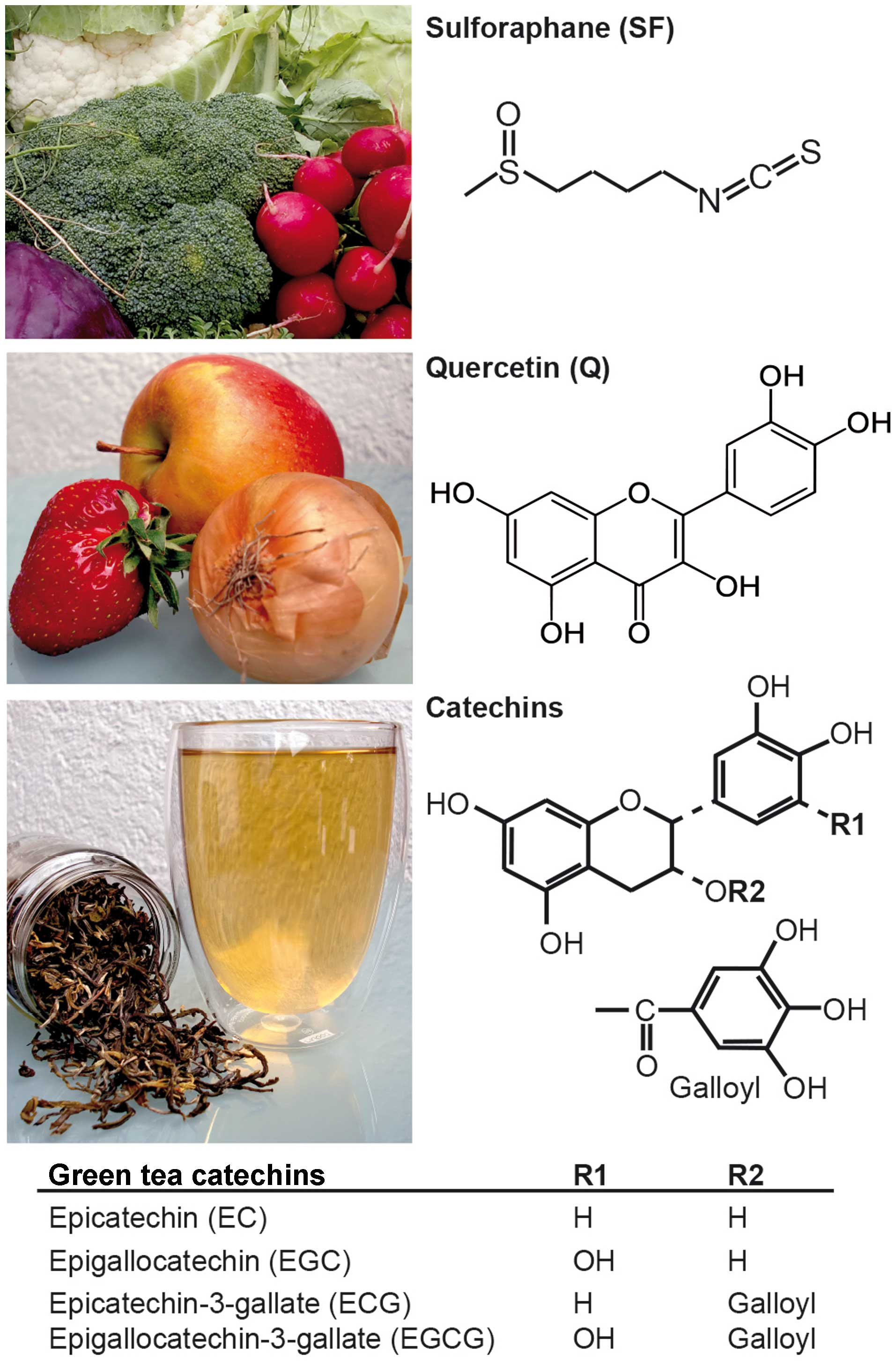 Sulforaphane Quercetin And Catechins Complement Each