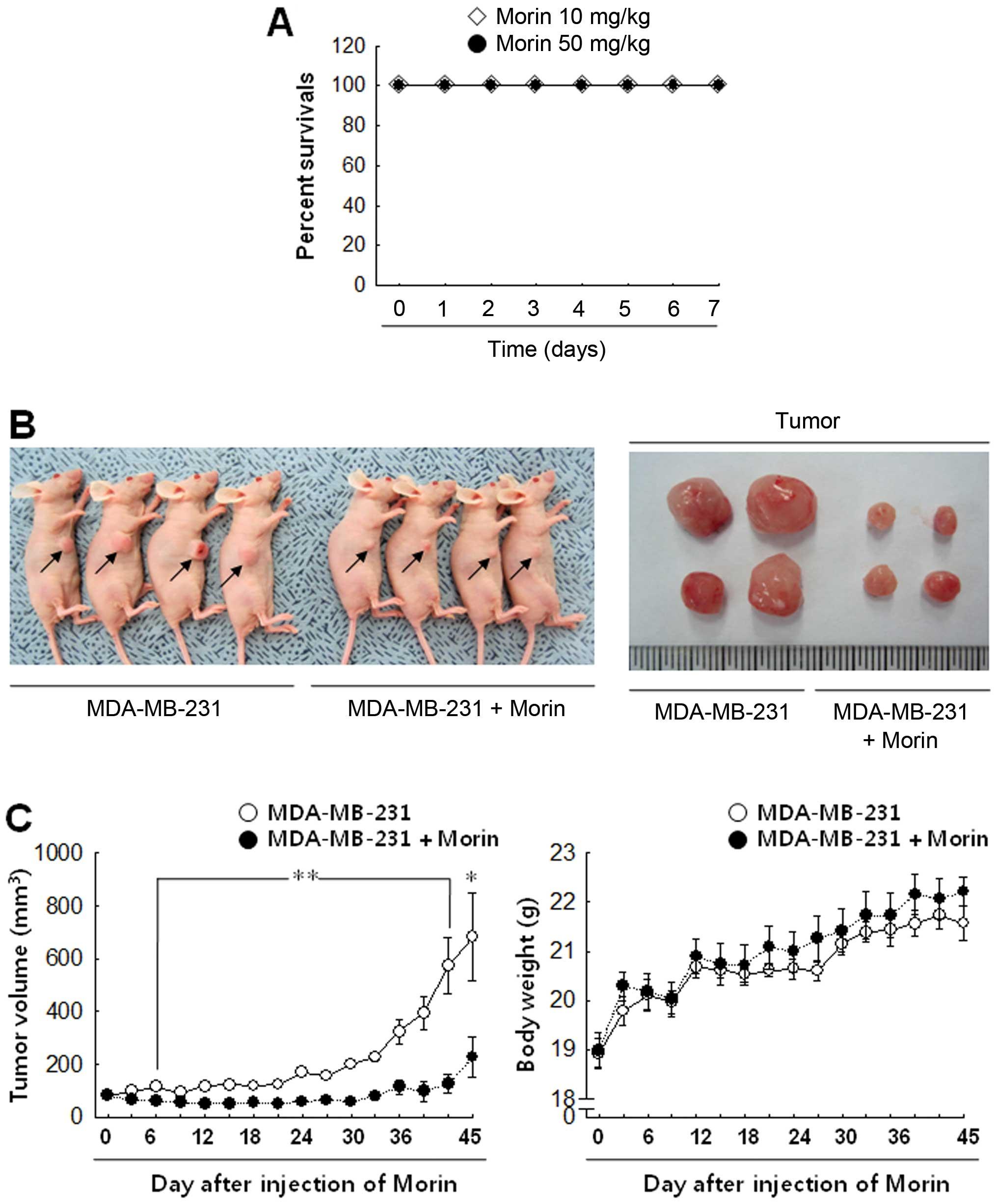 tehnica de tratament cu paraziti anthelmintic agent meaning