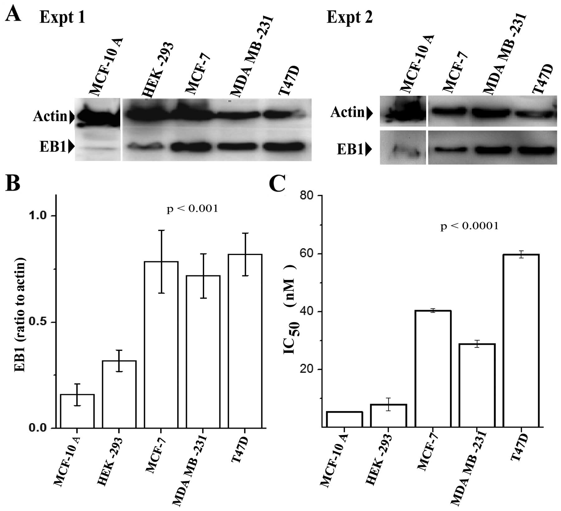 TIP EB1 downregulates paclitaxel‑induced proliferation