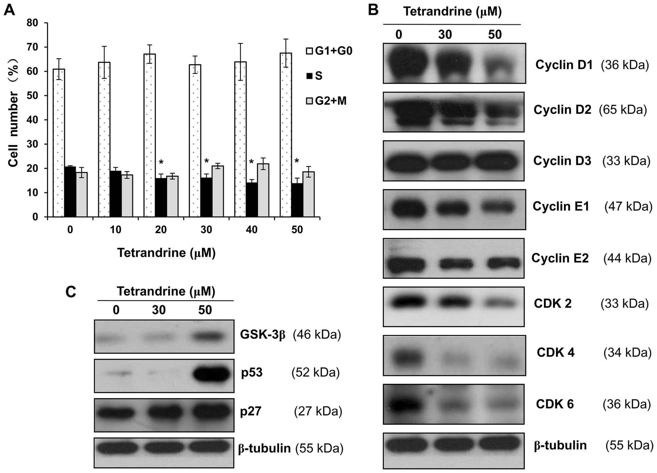 Tetrandrine Induces G1 S Cell Cycle Arrest Through The Ros