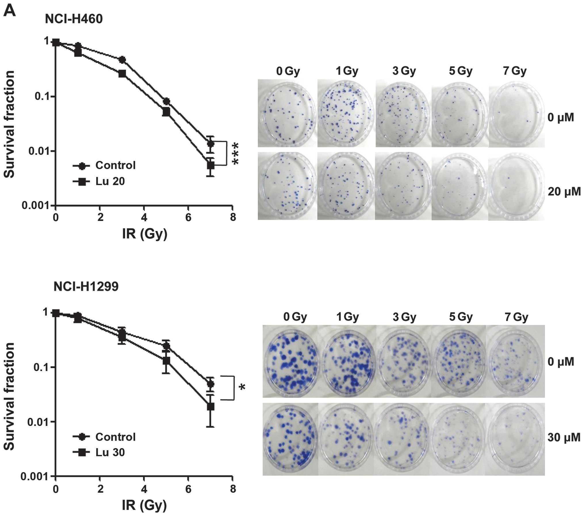 clonogenic assay of cells in vitro pdf