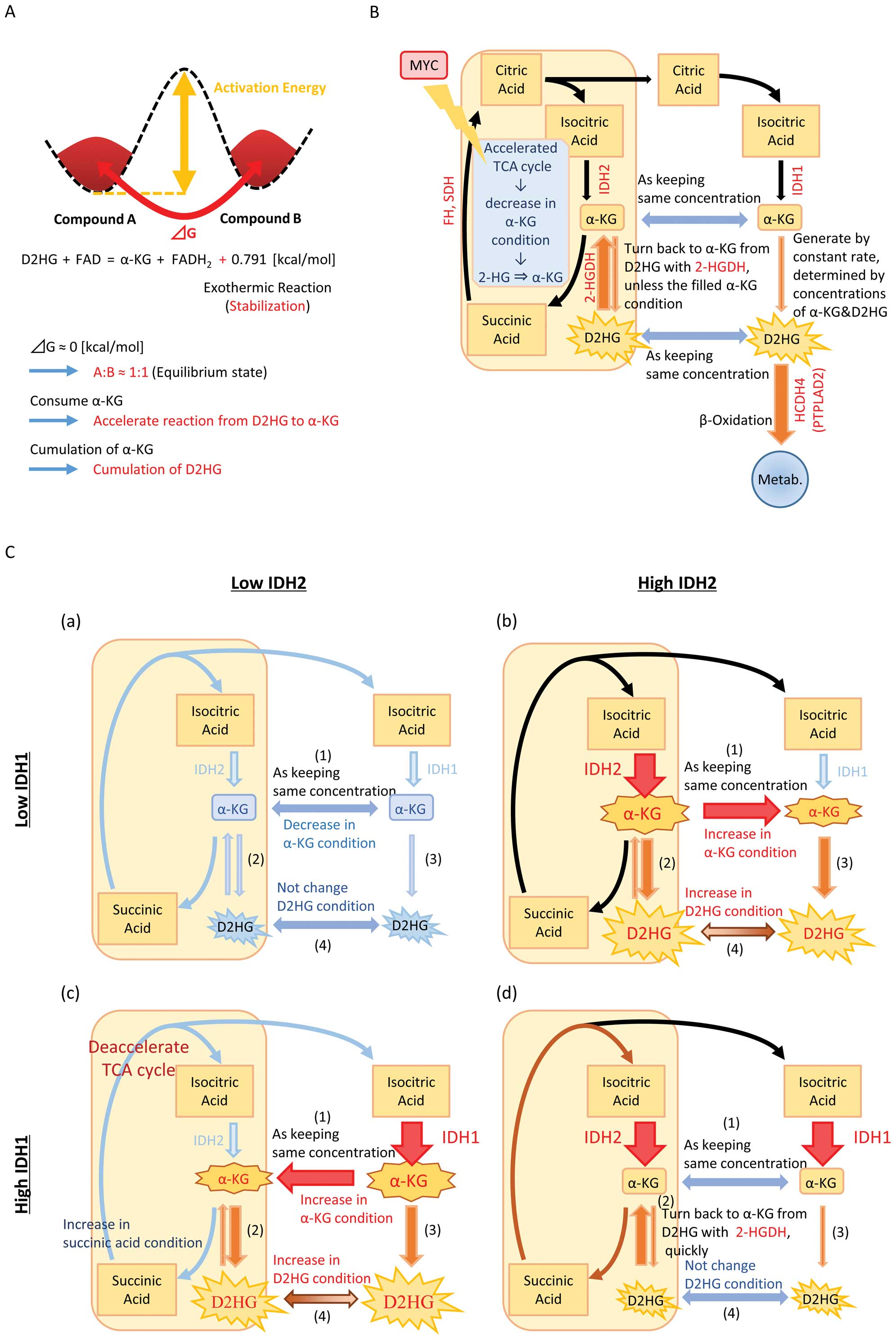 Mathematical analysis predicts imbalanced idh12 expression high myc expression makes improvements because of acceleration of tca cycle c schematic diagram explaining how an imbalance between the expressions of pooptronica Image collections