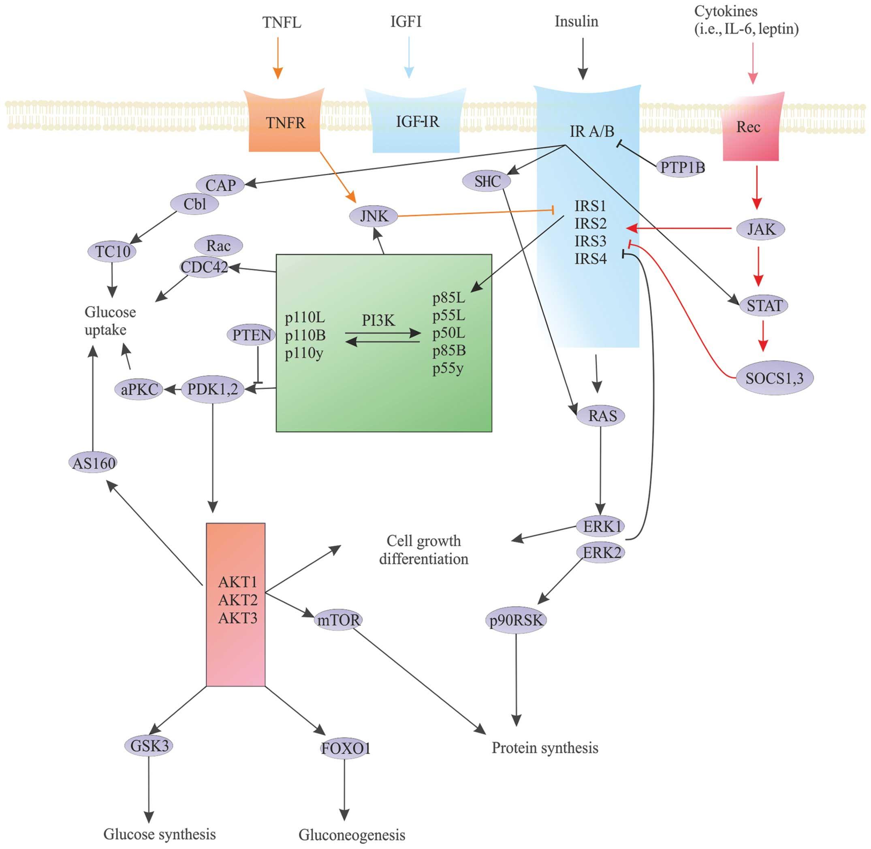 Molecular Basis Of Carcinogenesis In Diabetic Patients