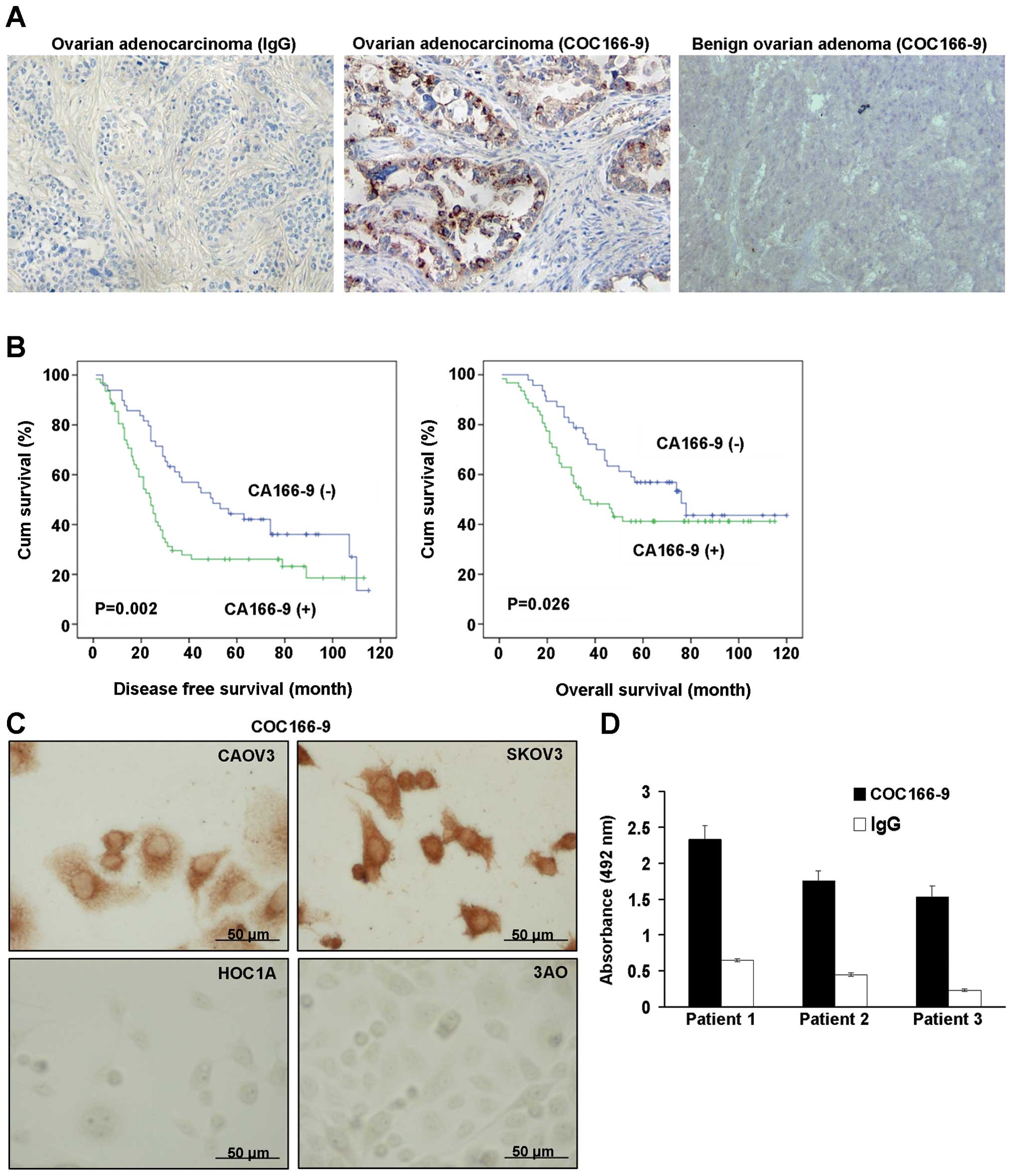 Prognostic Value And Characterization Of The Ovarian Cancer Specific Antigen Ca166 9