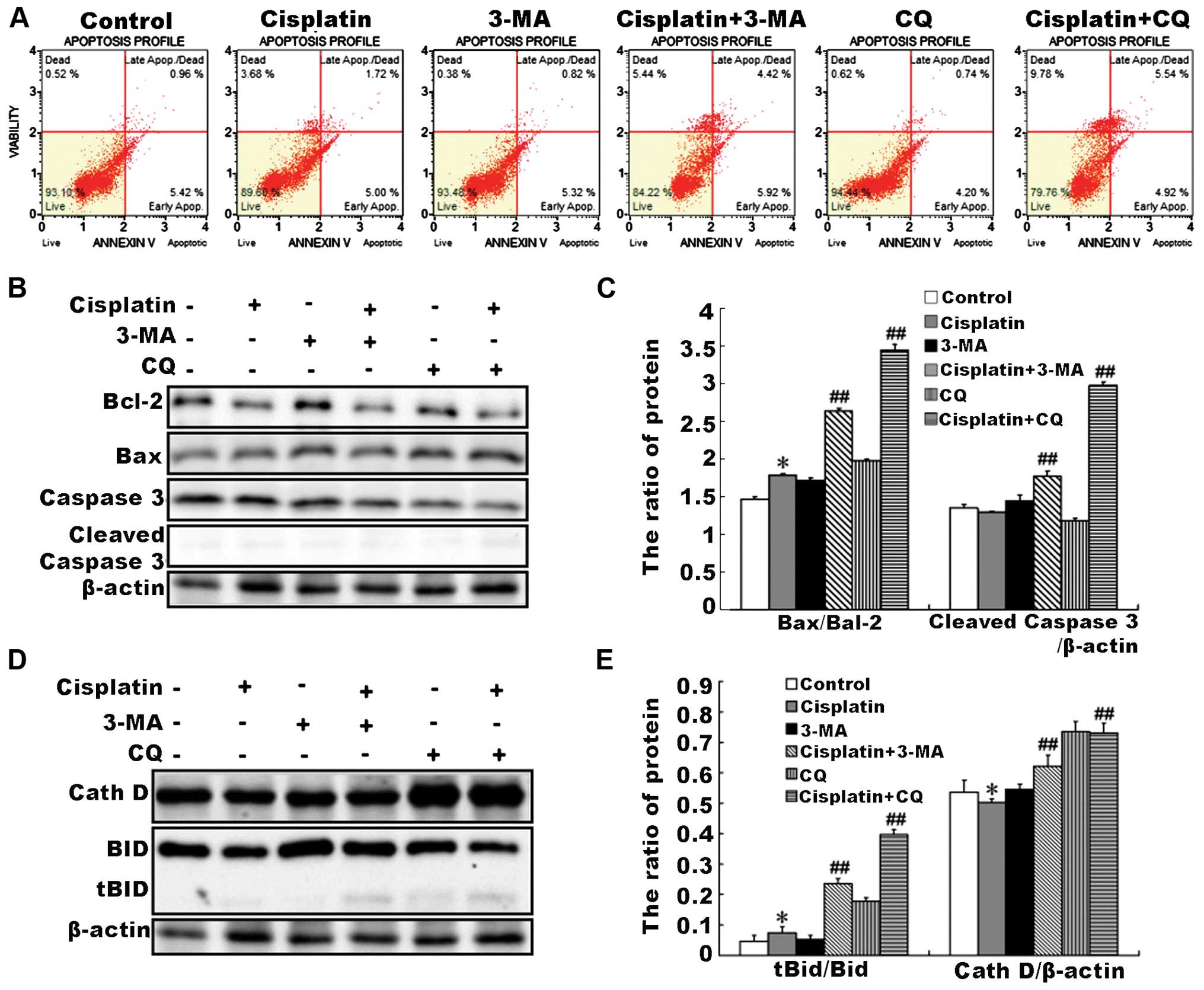 Combination with lysosome inhibitor improves the killing effect of   Download Scientific Diagram