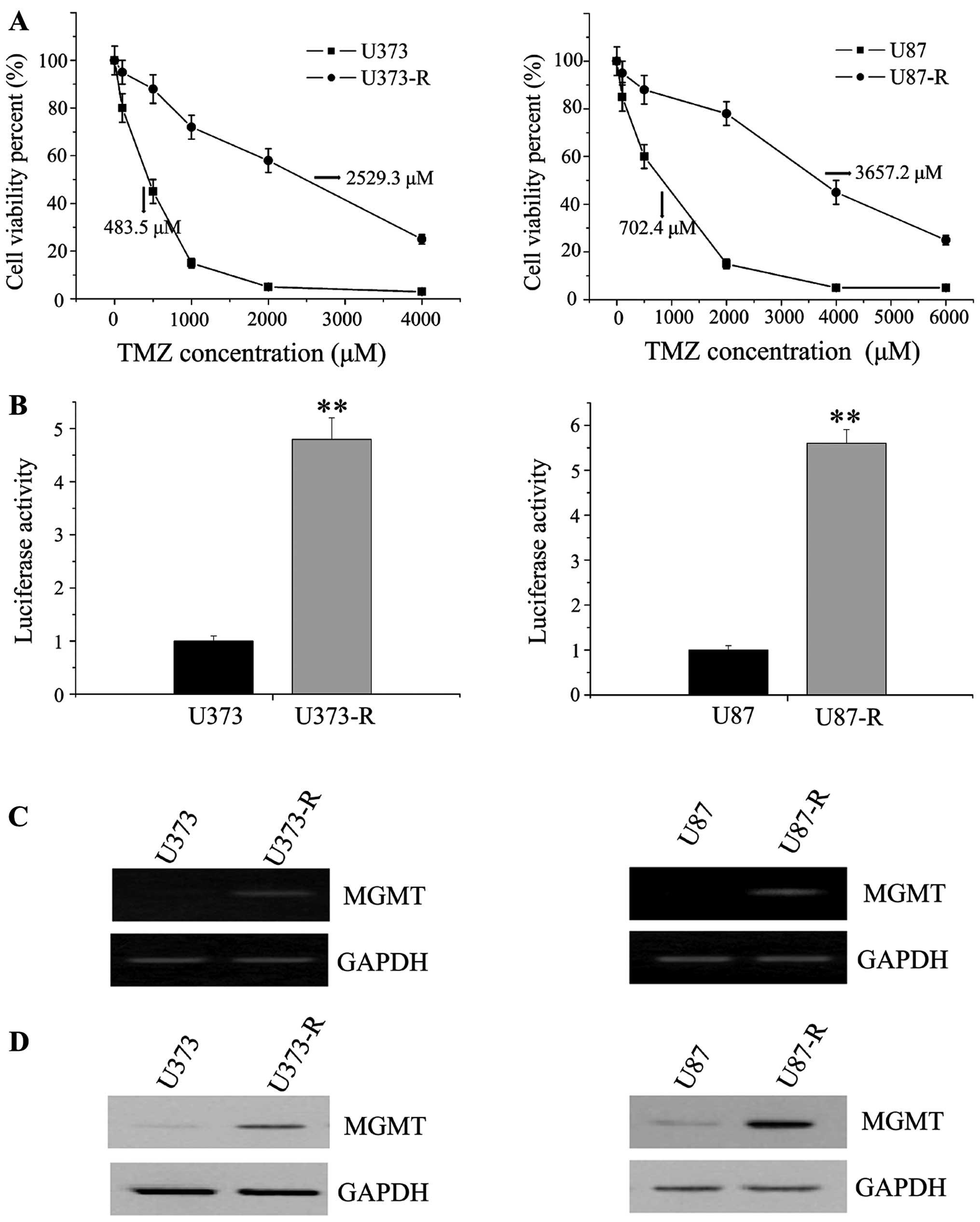 development of tmz resistant gbm cells a ic50 values of u373 r parental u373 and u87 r parental u87 cells determined by drug sensitivity assay