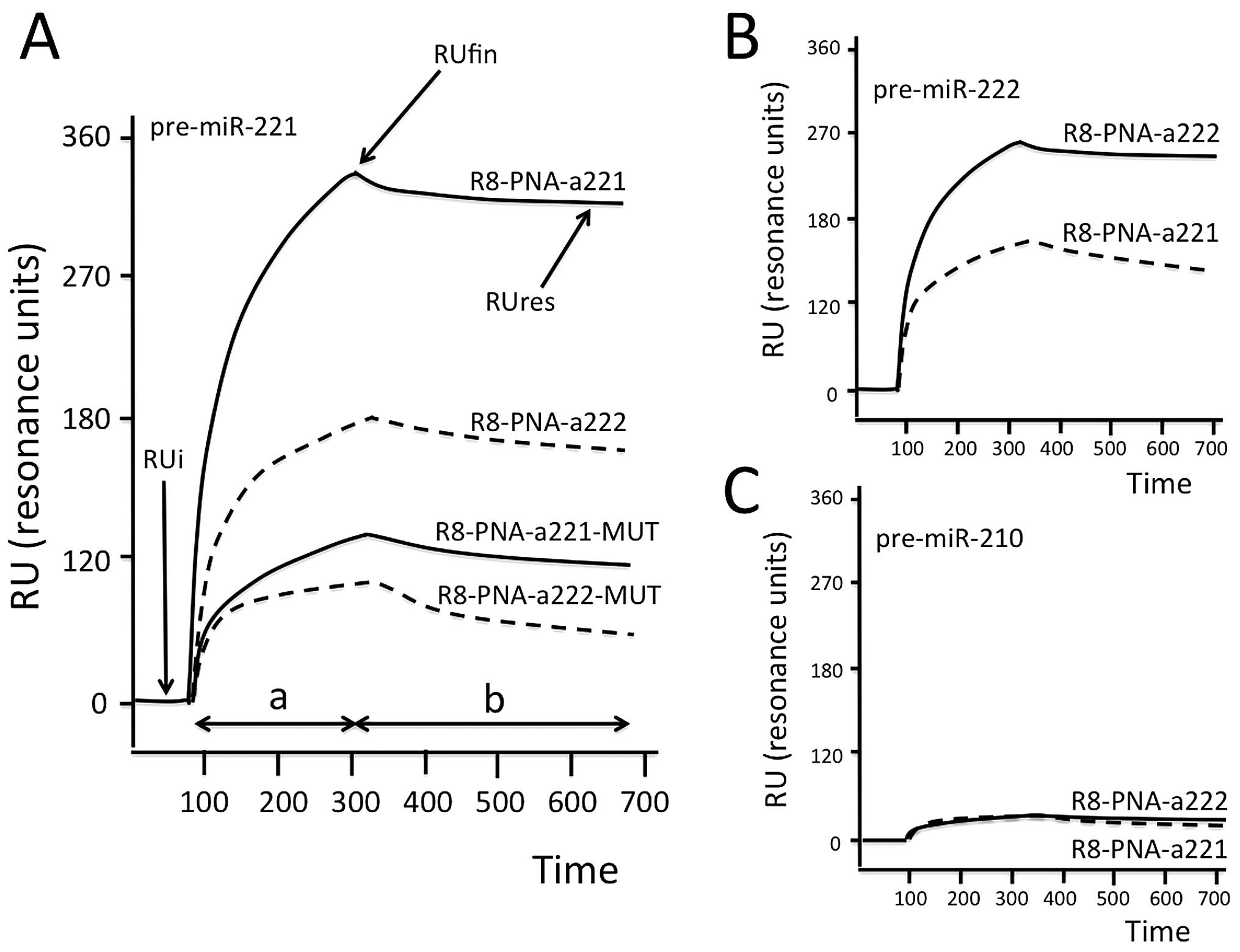 High Levels Of Apoptosis Are Induced In Human Glioma Cell Lines By Pna L Block Diagram B And C Bia Showing The Hybridization Between Injected Pre Mir 222 210 Sensor Chips To Which R8 A221 Or A222 Were