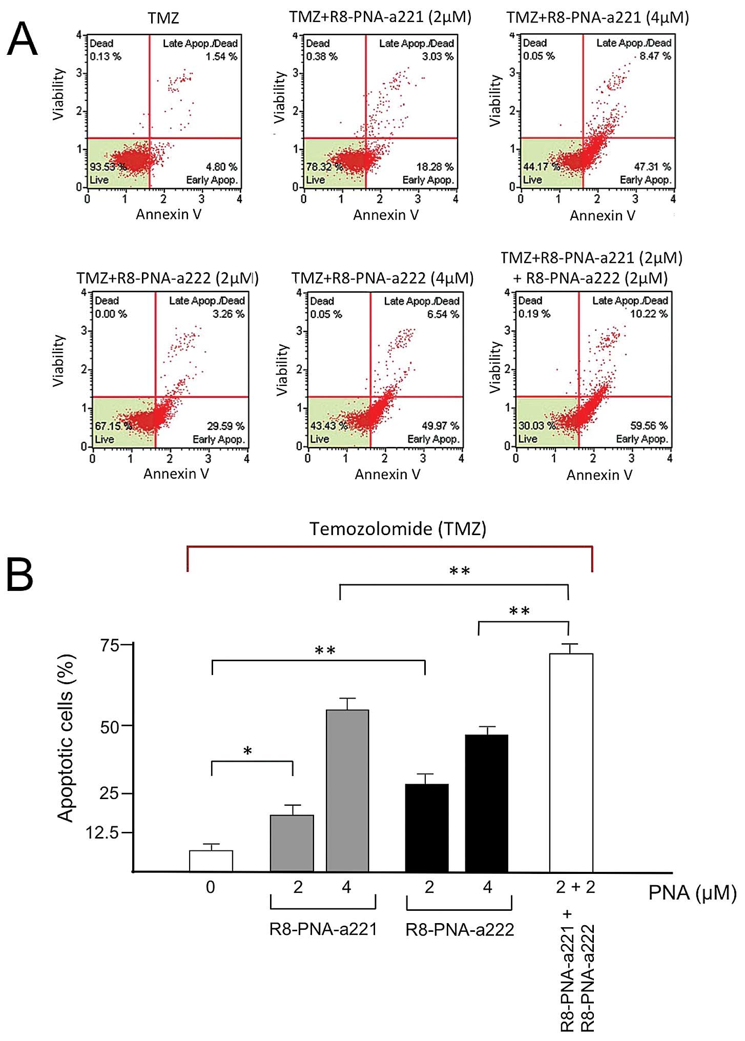 High Levels Of Apoptosis Are Induced In Human Glioma Cell Lines By Pna L Block Diagram T98g Cells Were Treated With 400 M Tmz The Absence Left White Box Or Presence Indicated Concentrations R8 A221 Grey Columns And