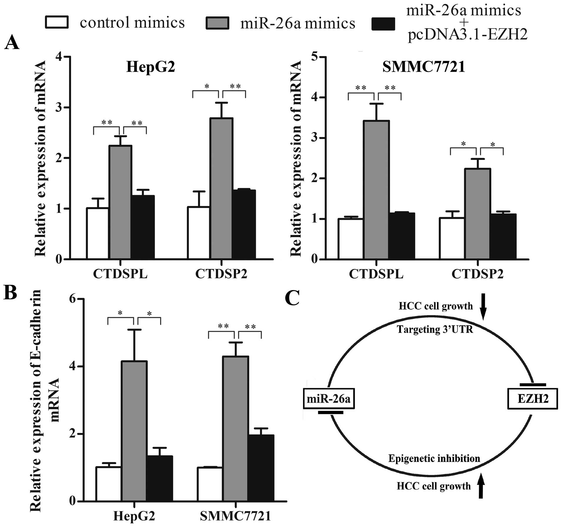 A Double Negative Feedback Loop Between Ezh2 And Mir 26a Regulates Schematic C Diagram Of The Formed By In Hcc Cells P001