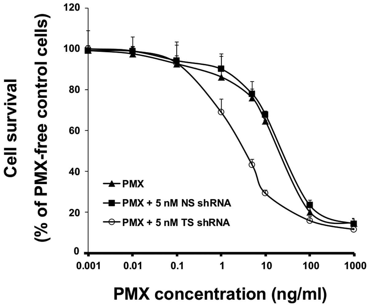 Downregulation of thymidylate synthase by RNAi molecules enhances