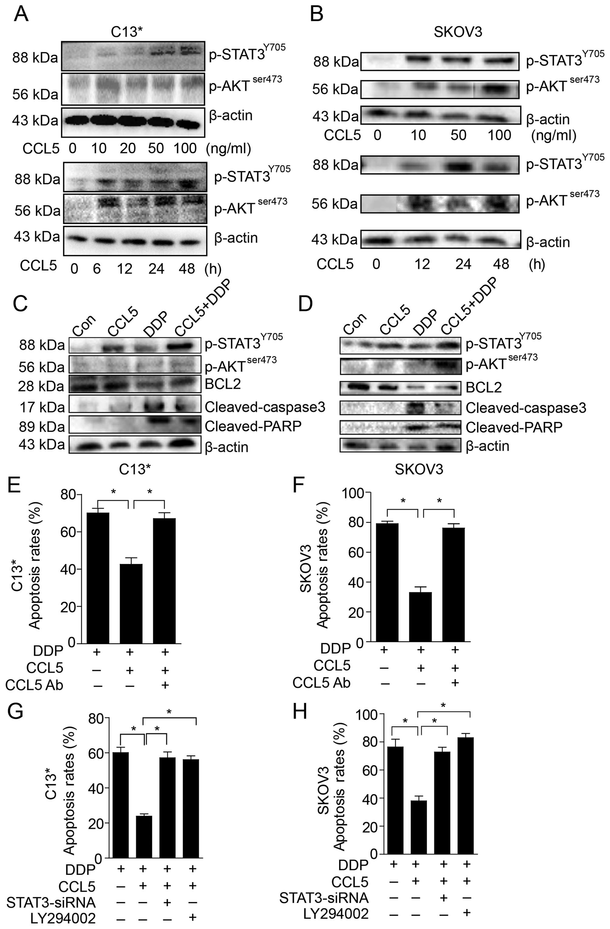 Uca1 in cisplatin induced ovarian cancer cell resistance