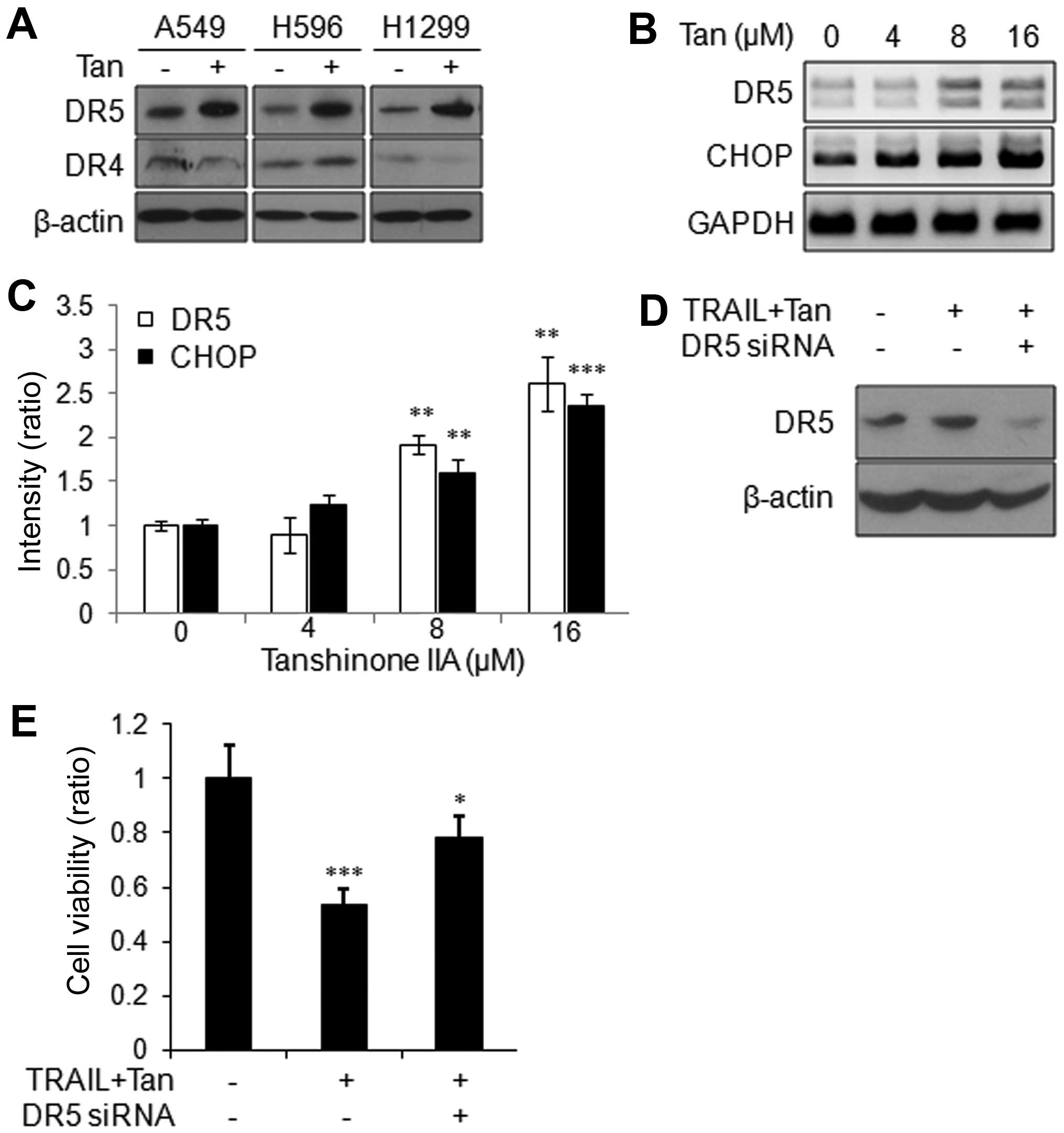 Impact of p53 status on TRAIL-R-mediated IL8 induction