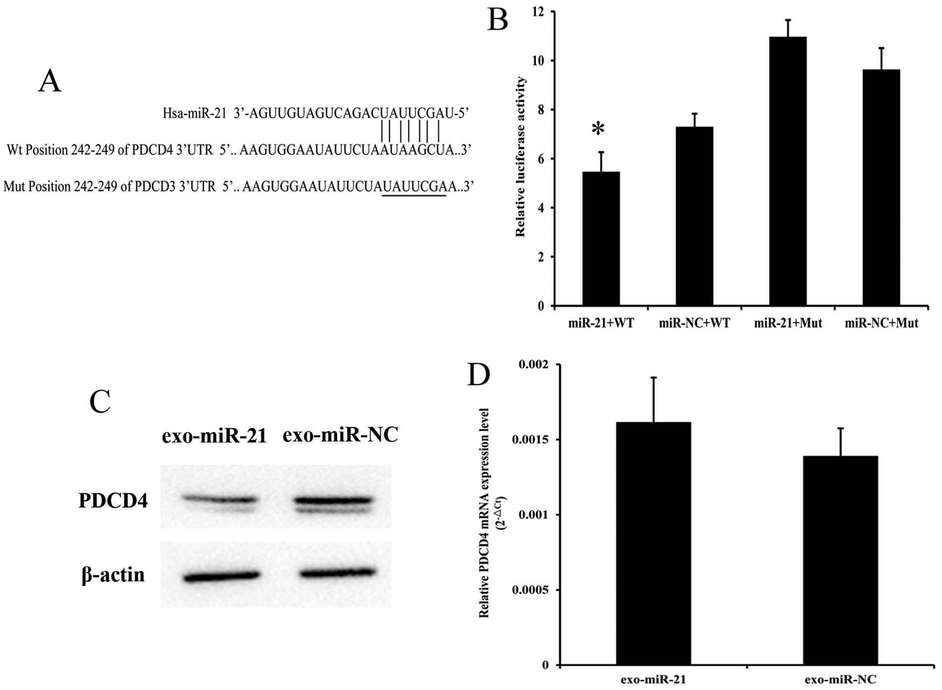 Exosome-shuttling microRNA-21 promotes cell migration and