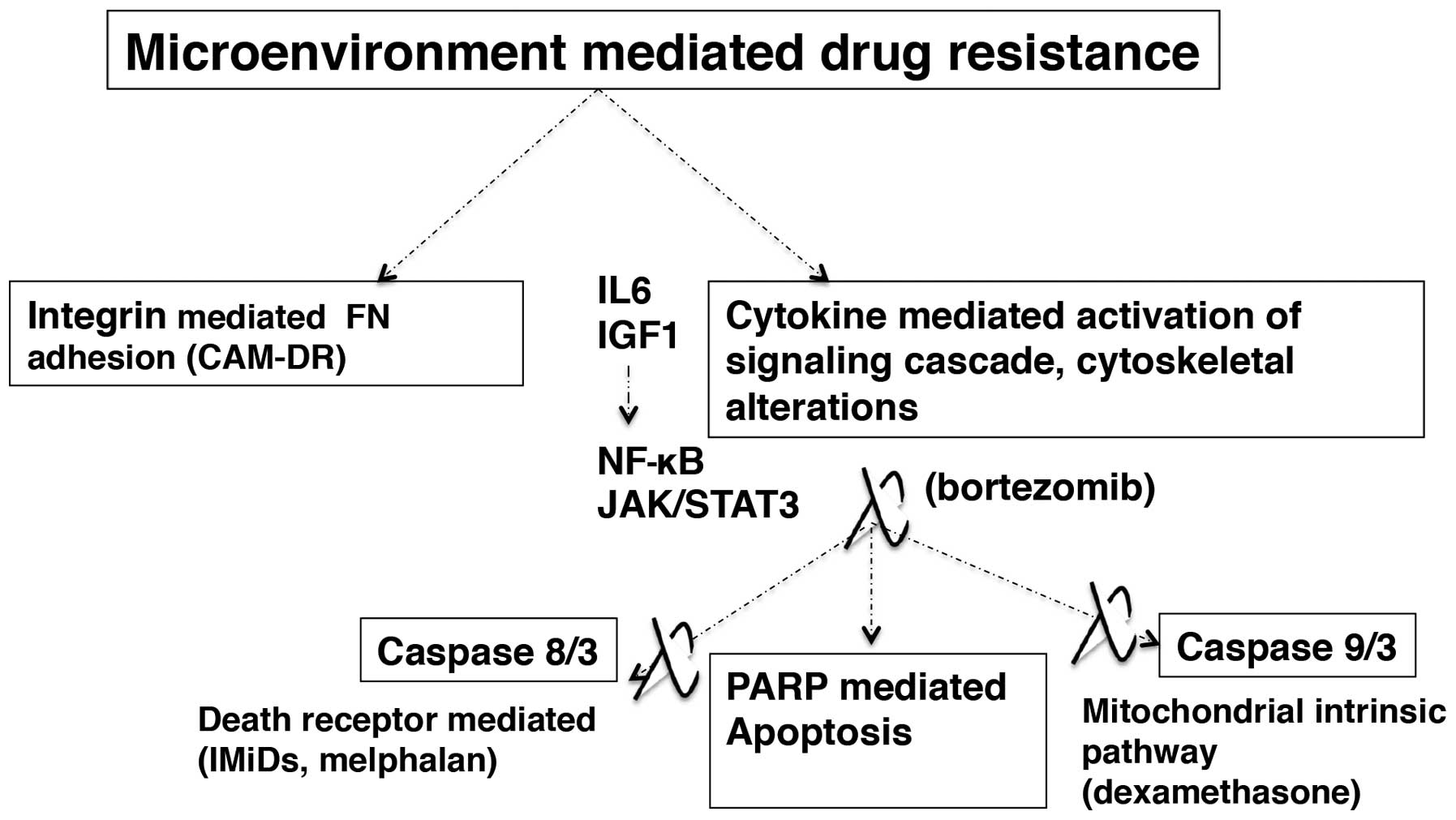 Multiple Myeloma And Persistence Of Drug Resistance In The Age To Verify That Resistances Series Do Indeed Add Let Us Consider Microenvironment Mediated Pathways Mm Cell Adhesion Cytokine Signaling Cascade Activation