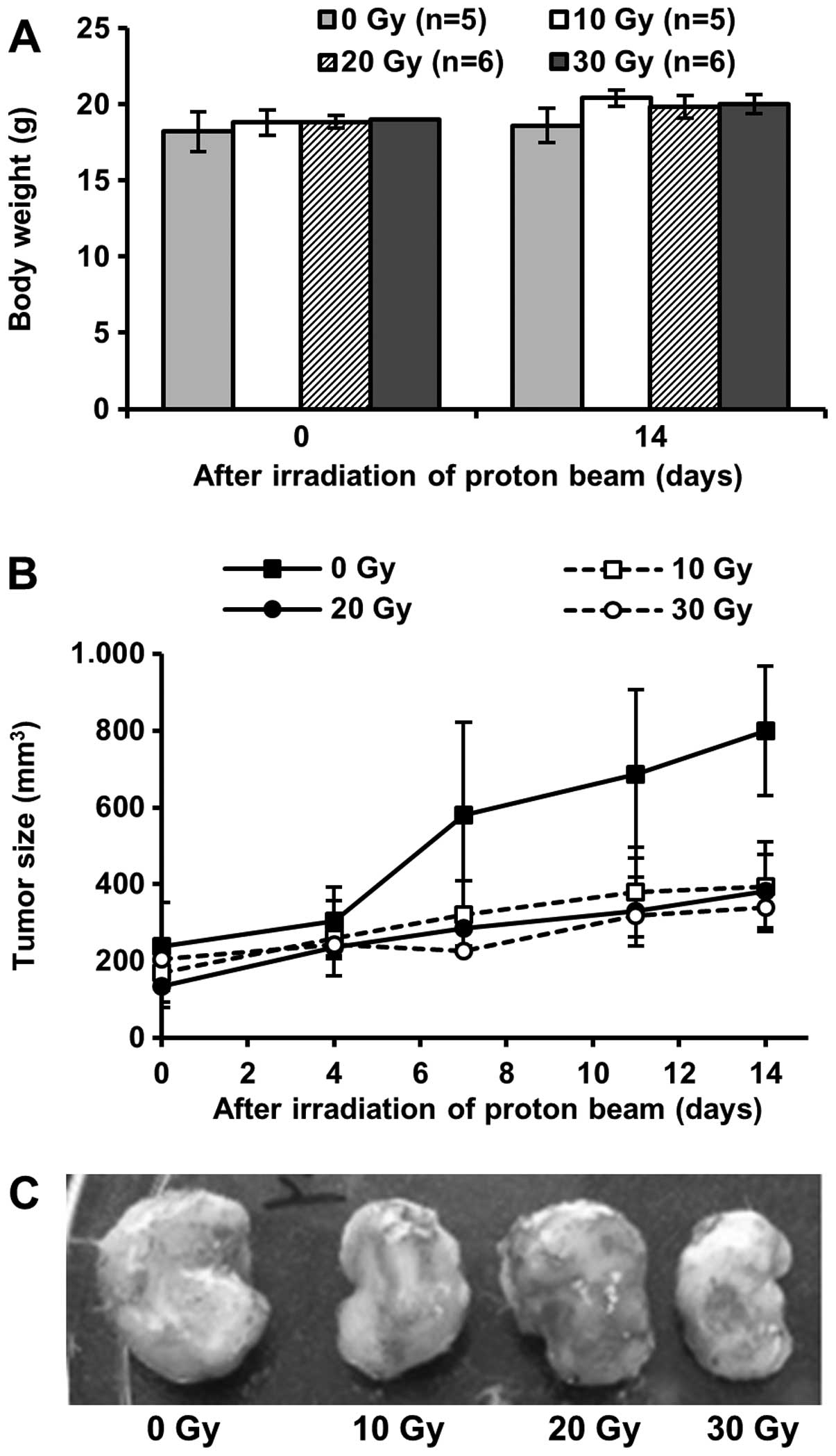 Suppressive effects of a proton beam on tumor growth and lung
