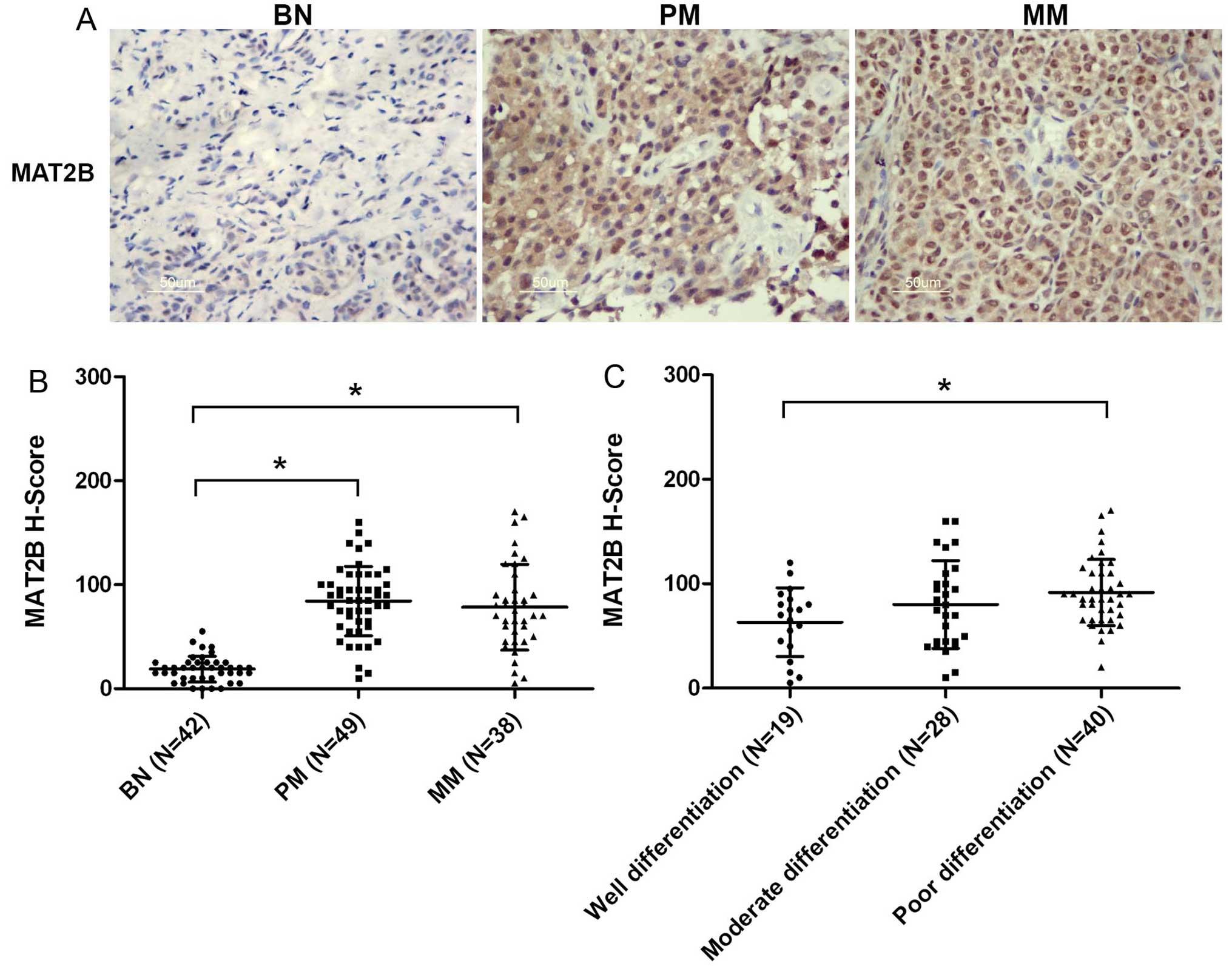 Lentivirus-mediated downregulation of MAT2B inhibits cell