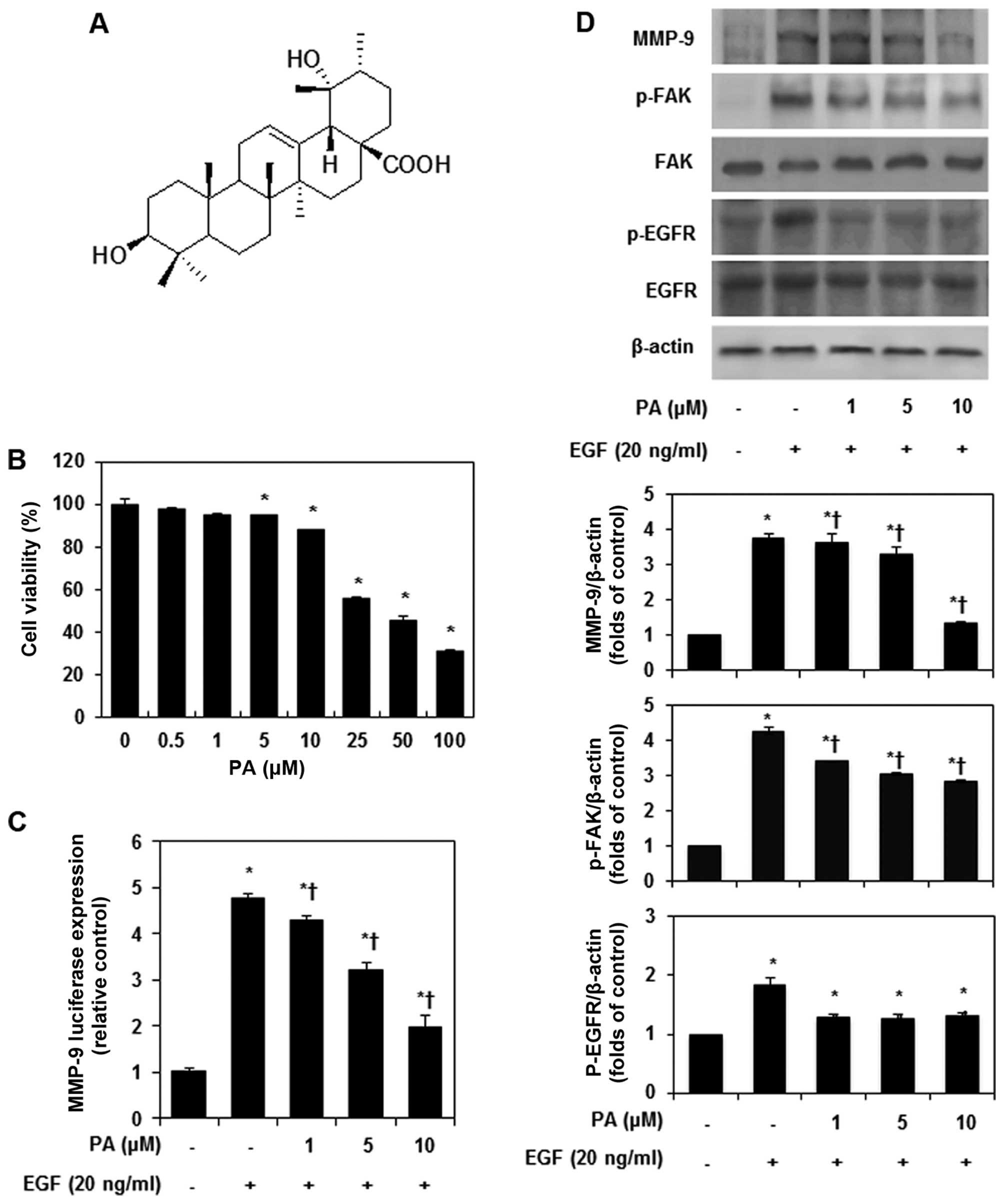 Suppression of MMP-9 and FAK expression by pomolic acid via blocking