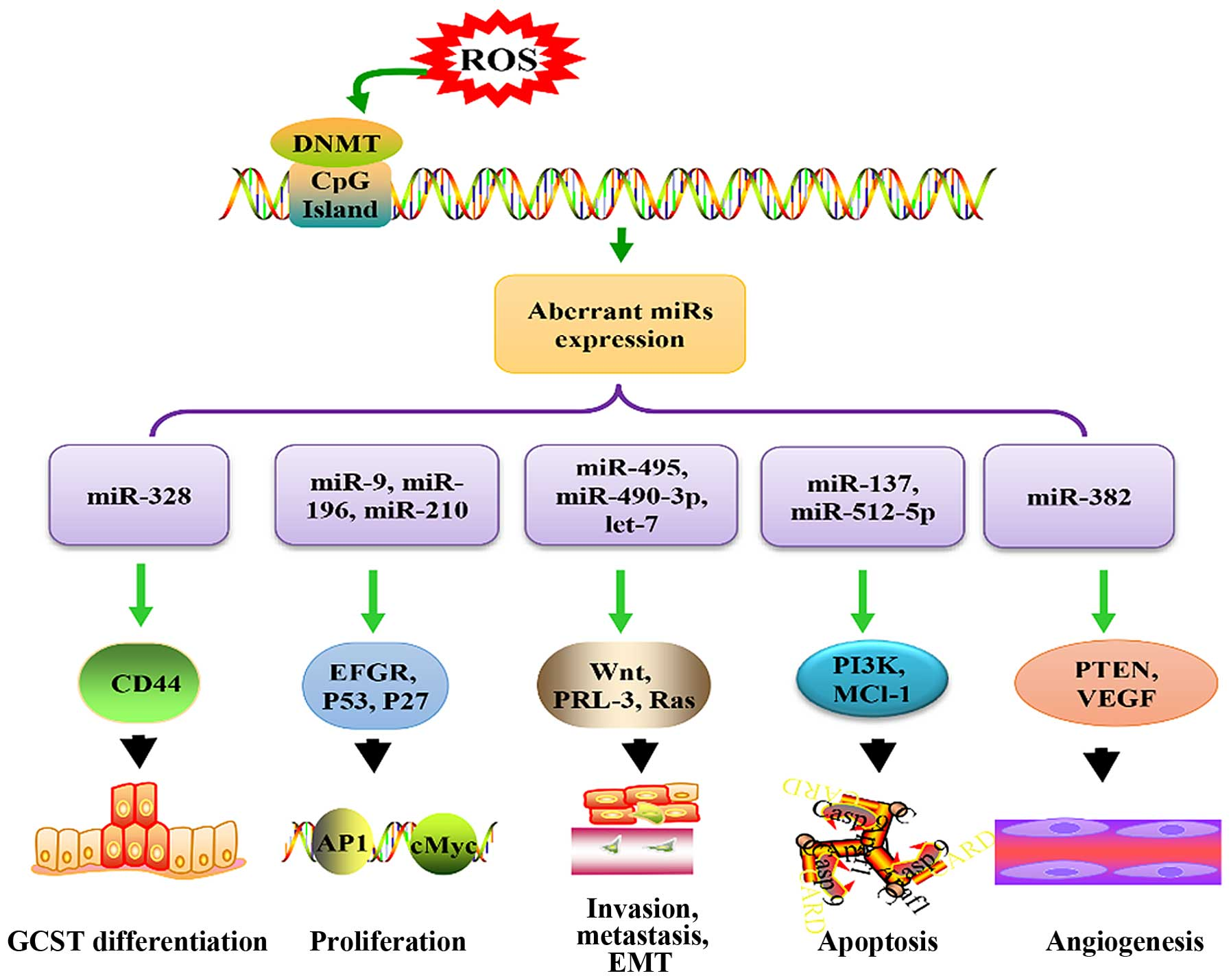MicroRNAs serve as a bridge between oxidative stress and gastric