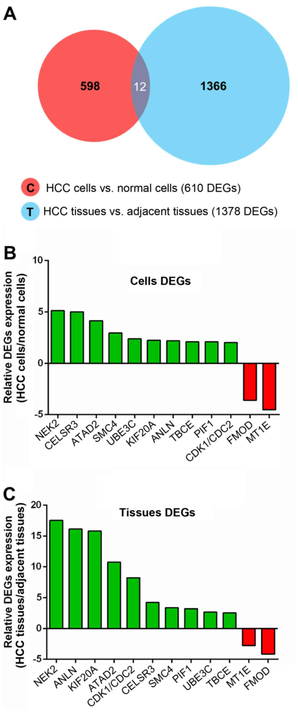 nek2 serves as a prognostic biomarker for hepatocellular carcinoma