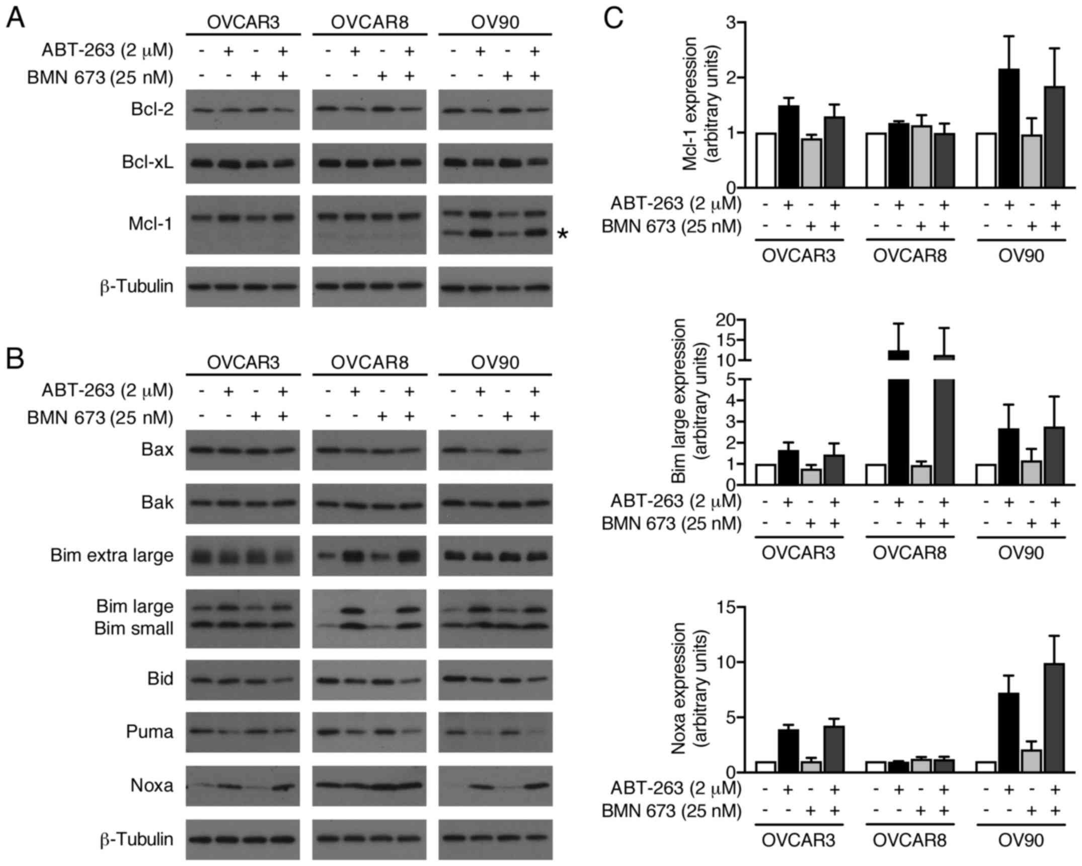 Apoptosis Is Augmented In High Grade Serous Ovarian Cancer By The Combined Inhibition Of Bcl 2 Bcl Xl And Parp